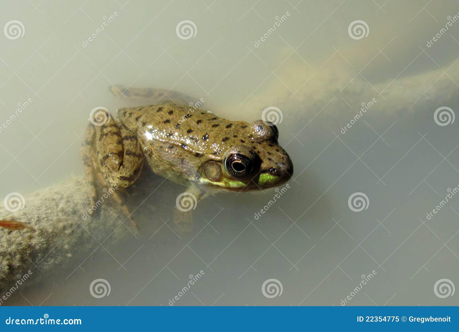 有雾的青蛙