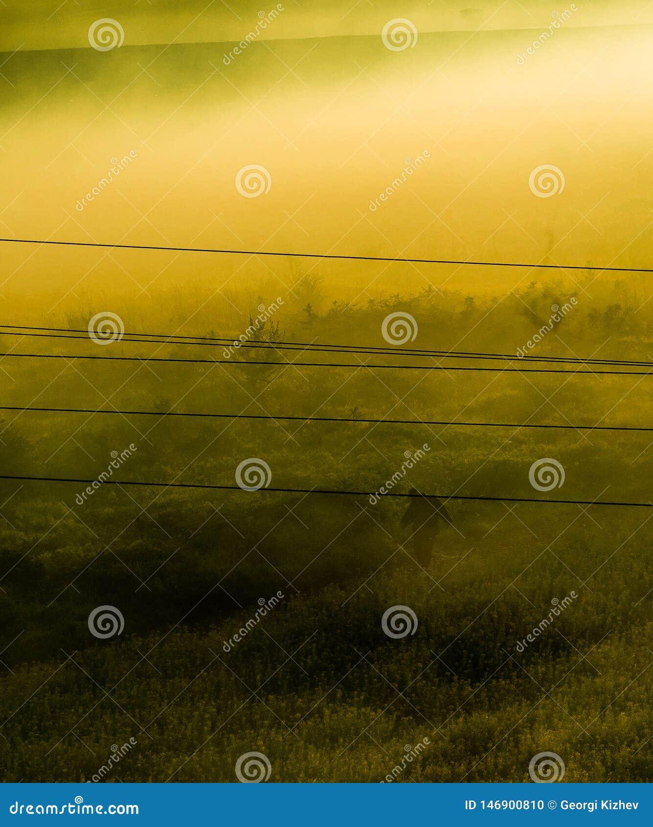 有雾的领域