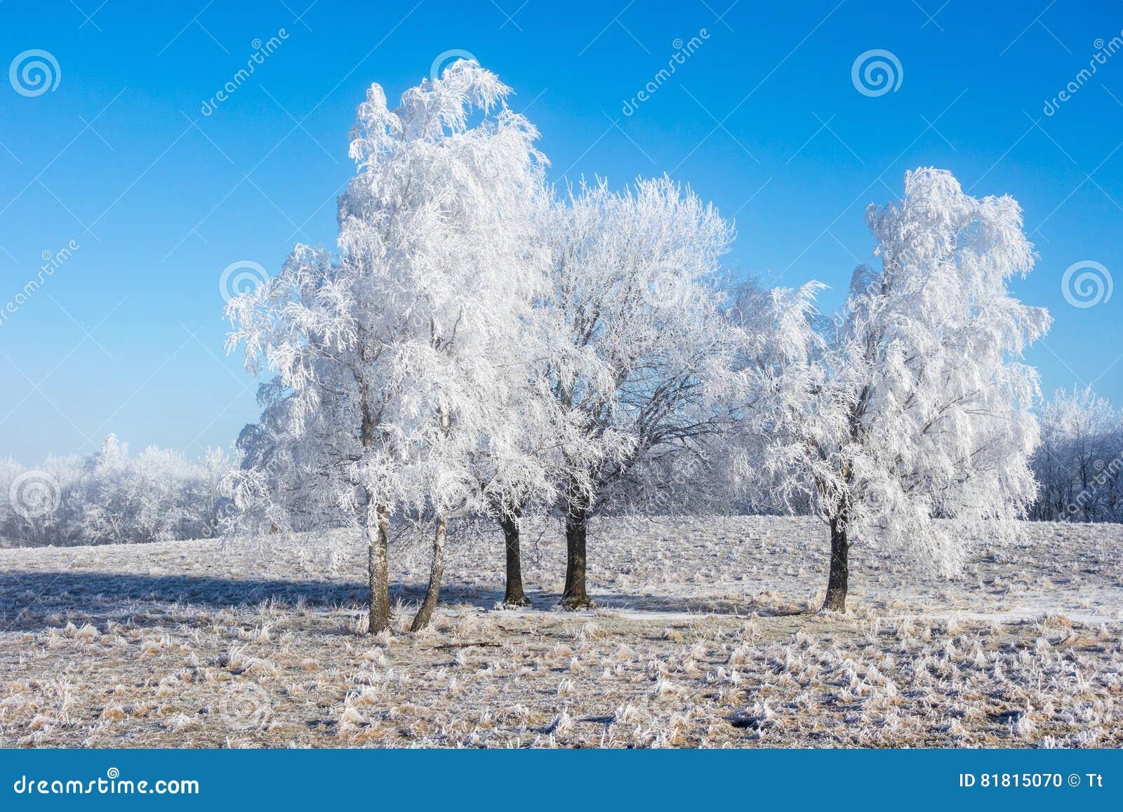 有霜的树树丛
