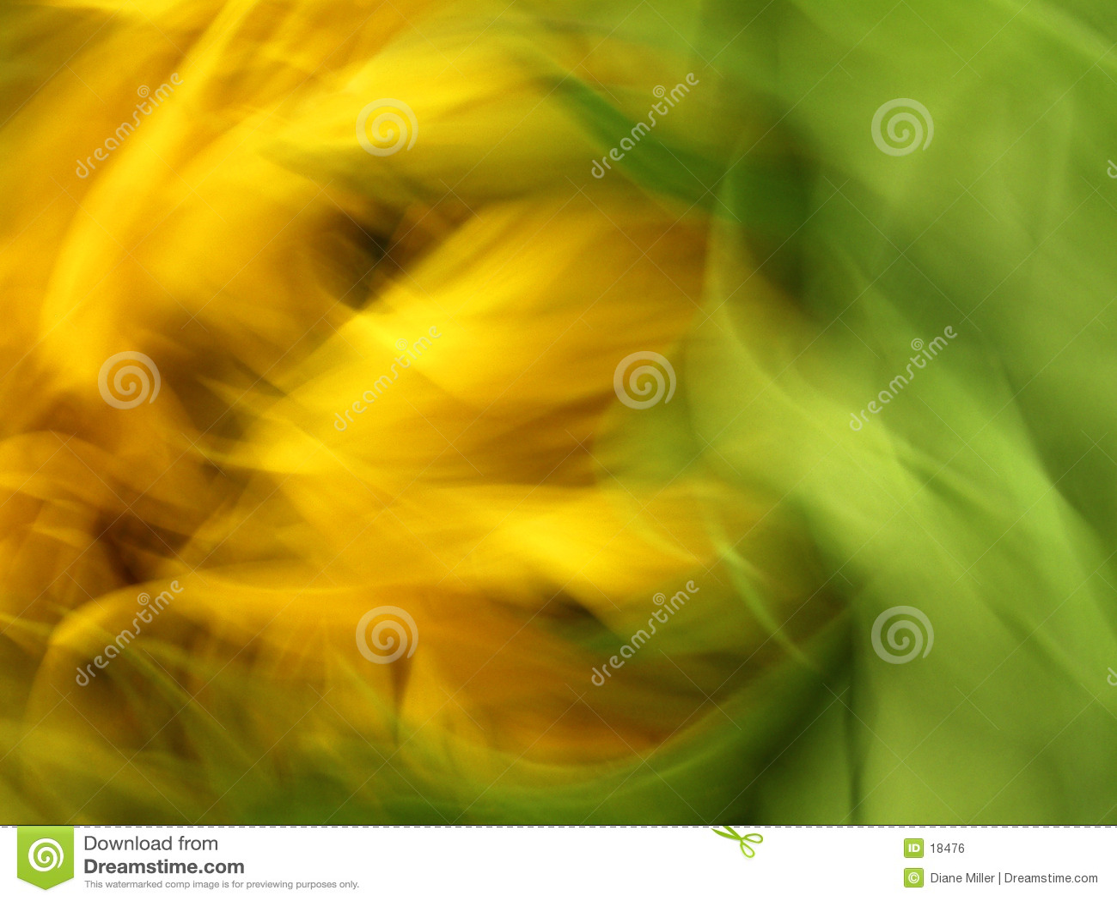 有风的向日葵