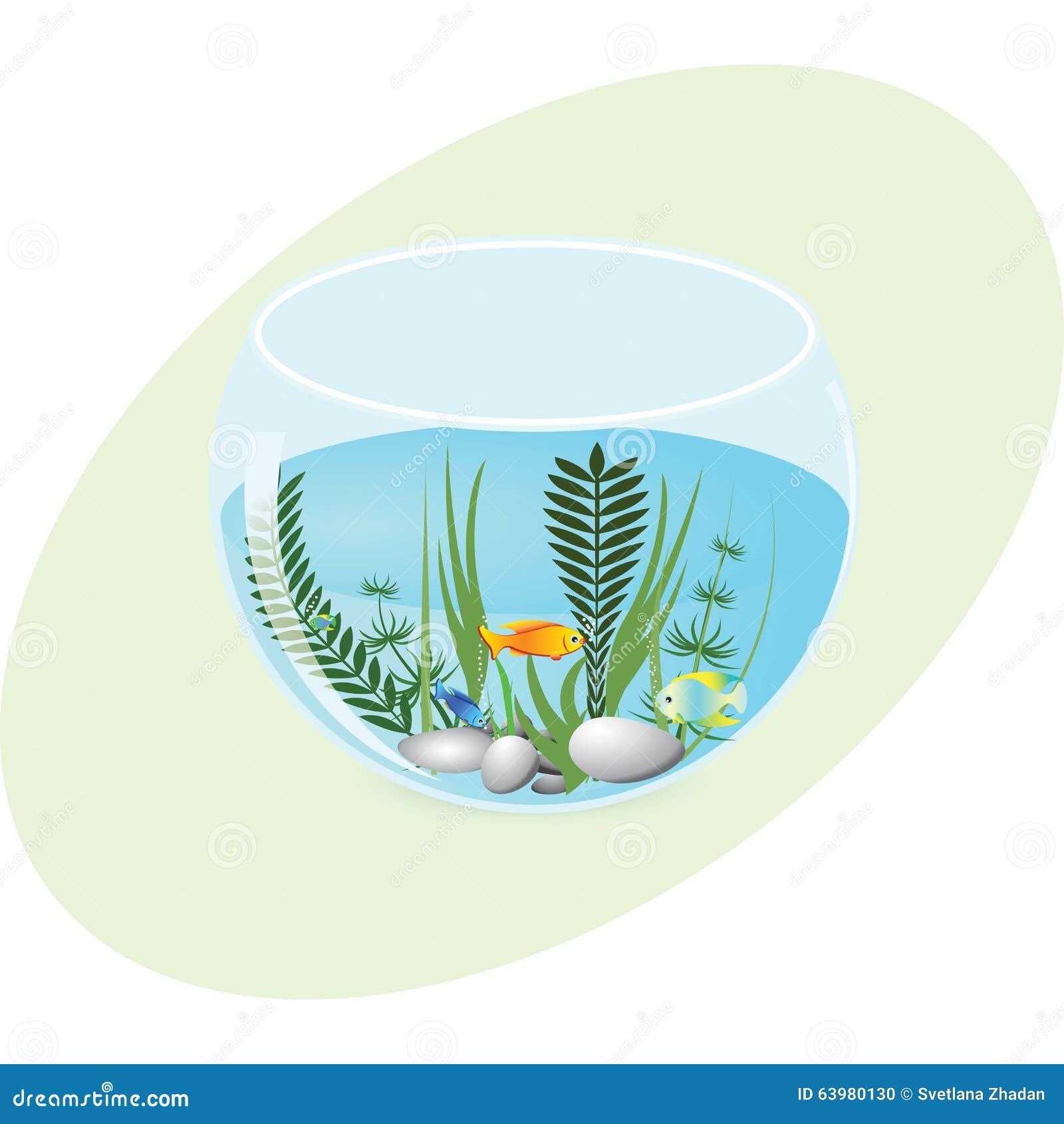 有鱼和植物的水族馆