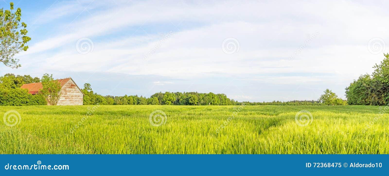 有麦田和谷仓的农村风景全景
