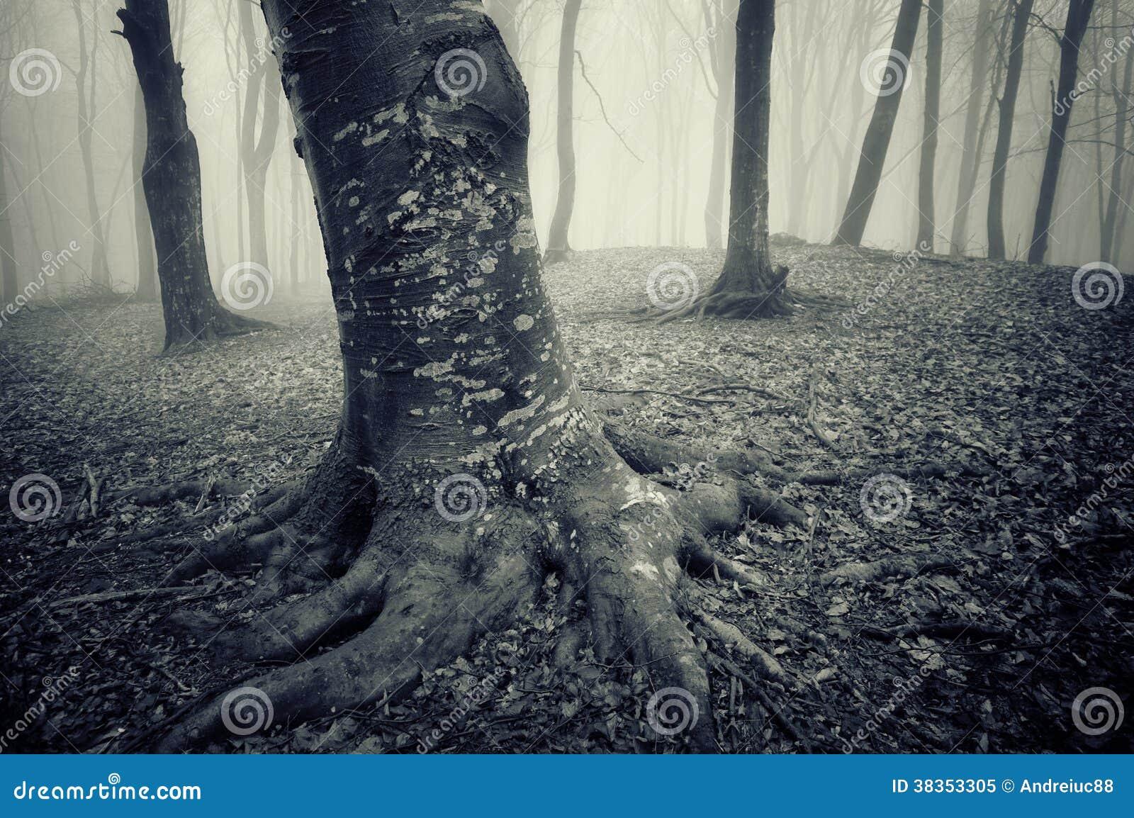有令人毛骨悚然的看的树的黑暗的森林在万圣夜