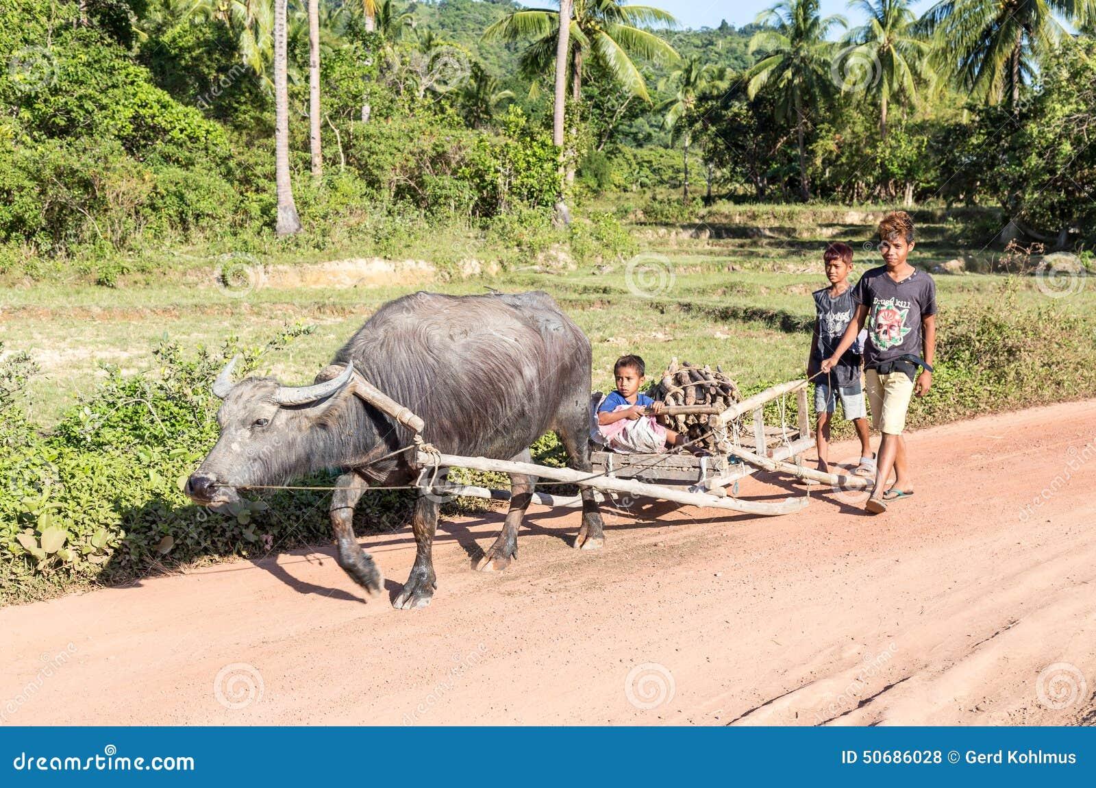 Download 有水牛的骑马家 编辑类库存照片. 图片 包括有 问题的, 收获, 子项, 菲律宾, 农场, 工作, 耕犁 - 50686028