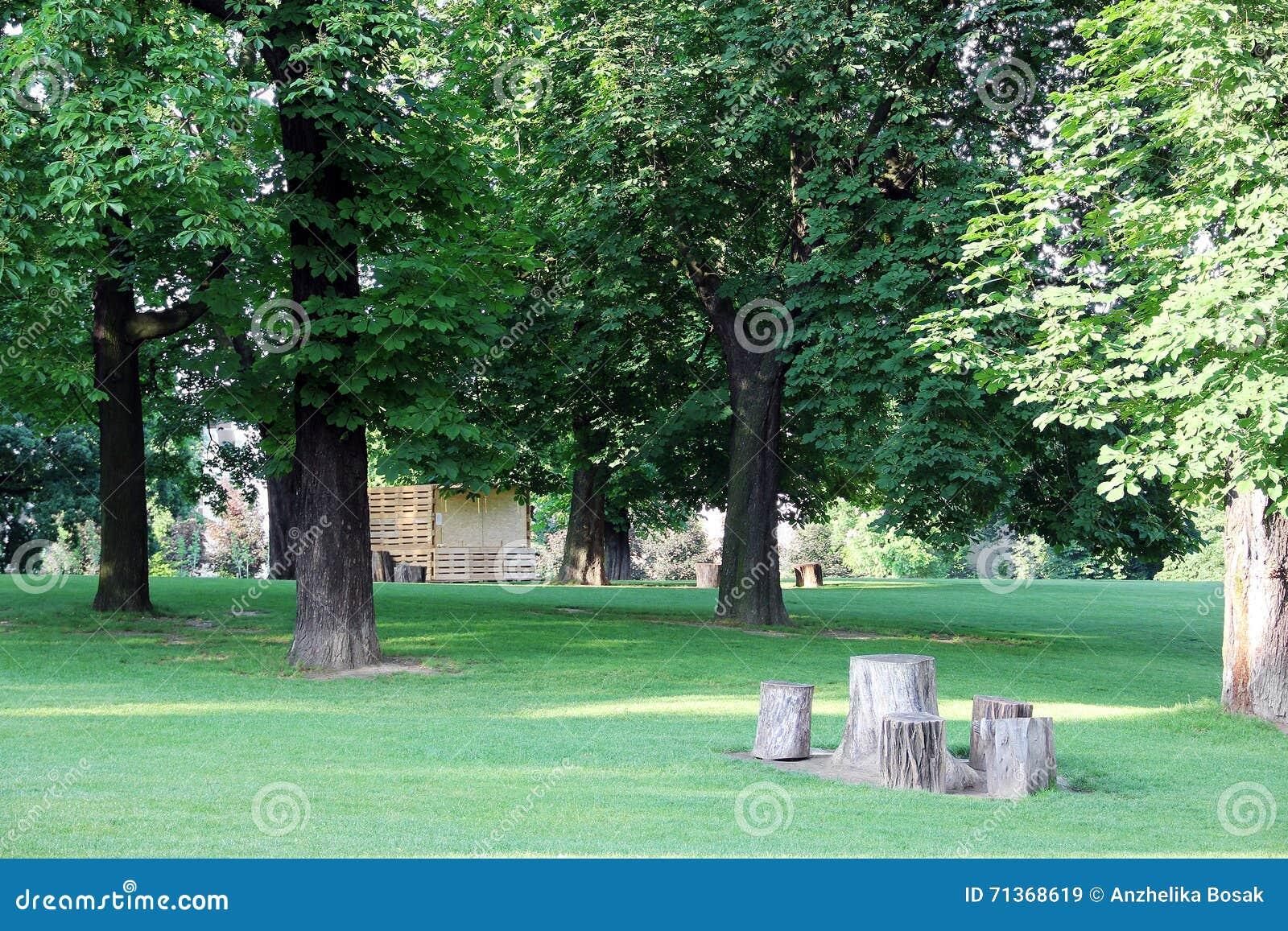 有绿色树和树桩的公园