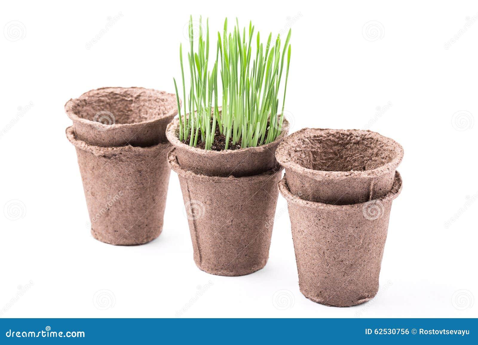 有绿草的泥煤罐在白色背景