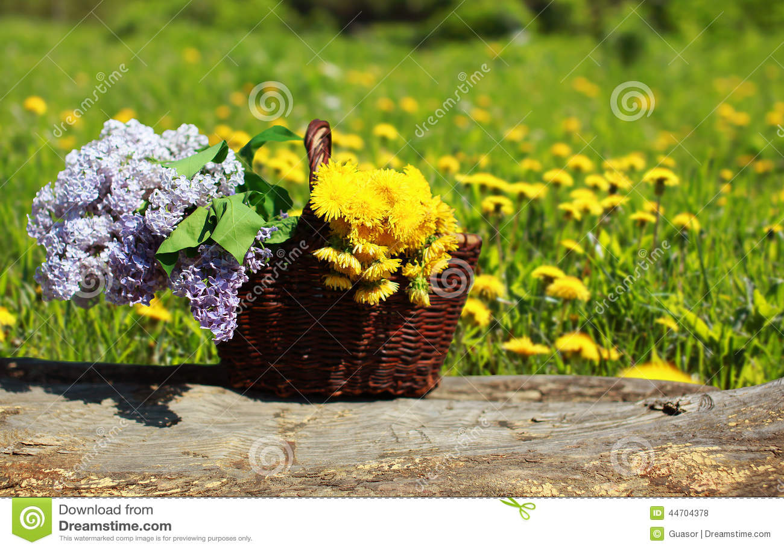 晴朗的夏天背景篮子用黄色蒲公英和丁香