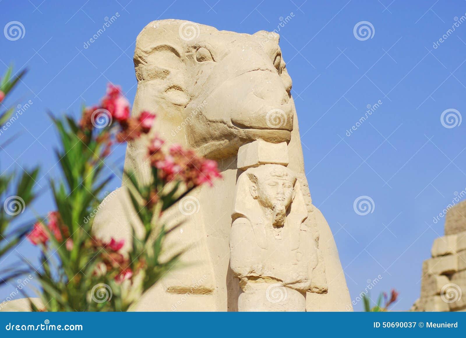 Download 朝向的公羊狮身人面象 库存图片. 图片 包括有 公羊, 闹事, 青蛙, 安排, 反气旋, 装饰, 神话, 埃及 - 50690037