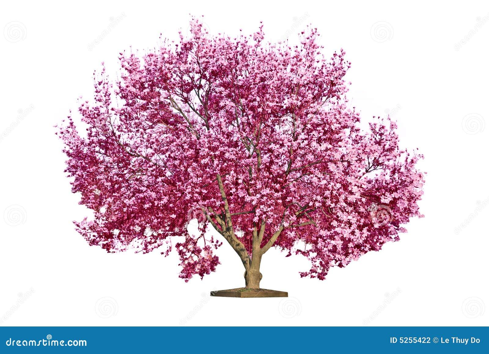 木兰开花的结构树