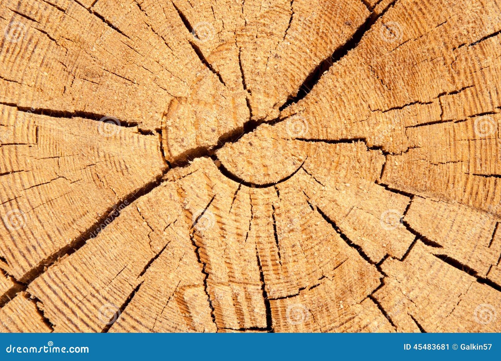 木切片cruba的纹理