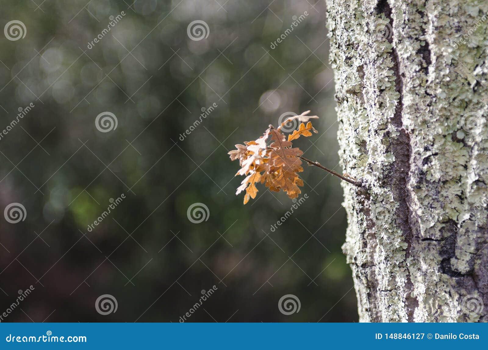 木头在雨以后的秋天