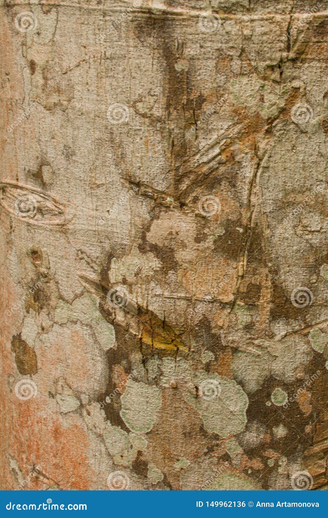木头纹理在密林特写镜头的 亚马逊雨林阿马佐纳斯,巴西