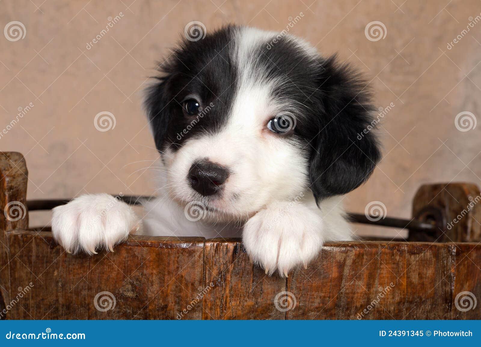 木时段的小狗
