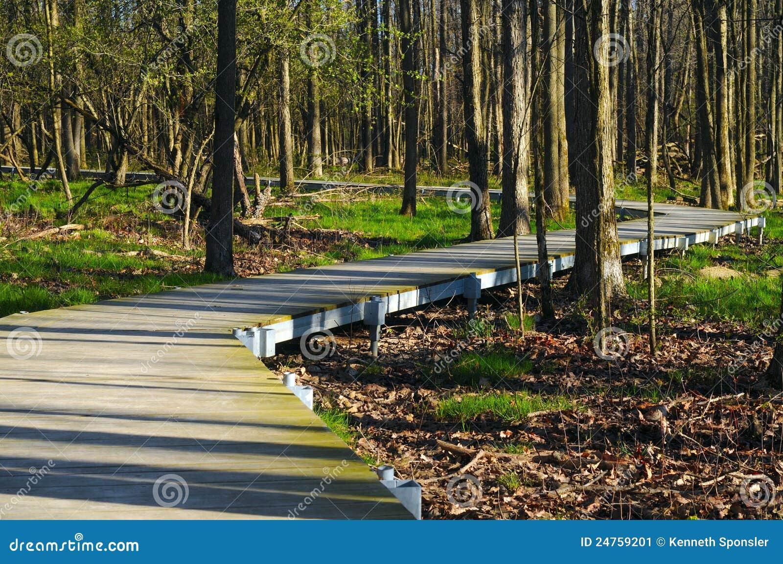 木板走道森林地