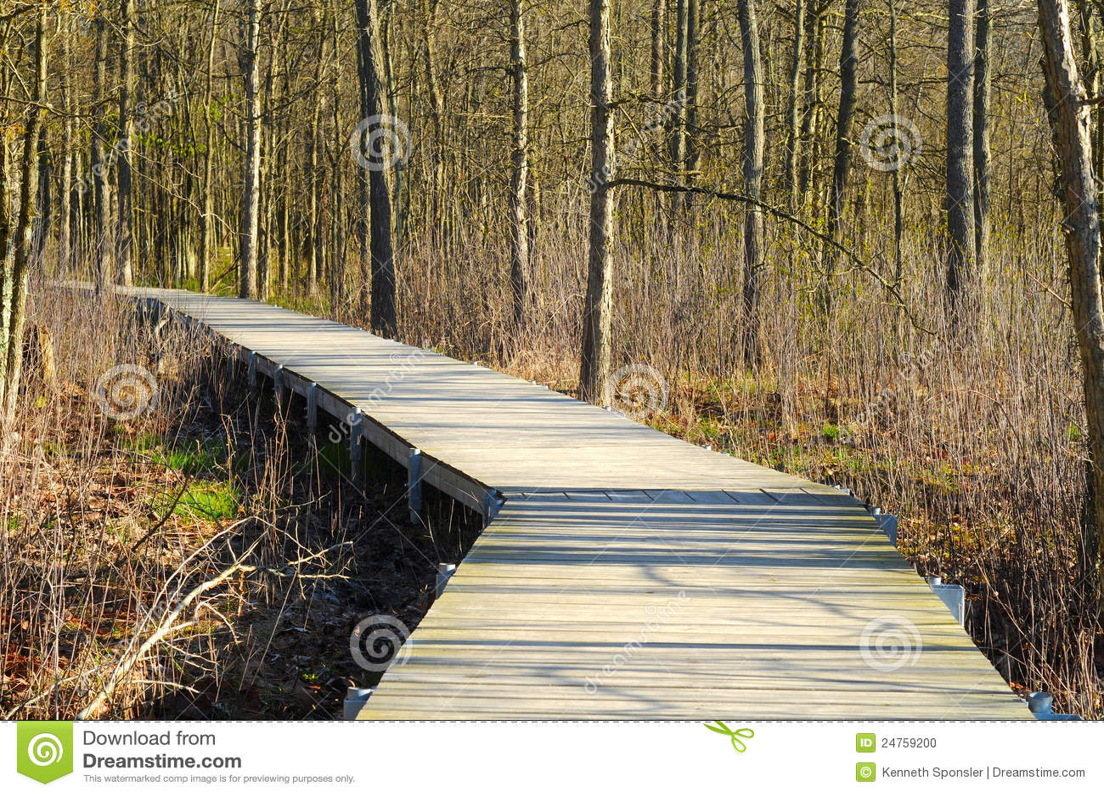 木板走道沼泽地
