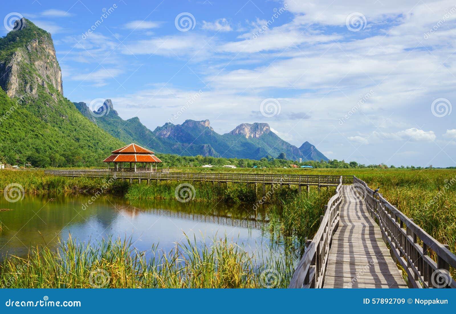 木桥在khao山姆roi yod国家公园的, t莲花湖