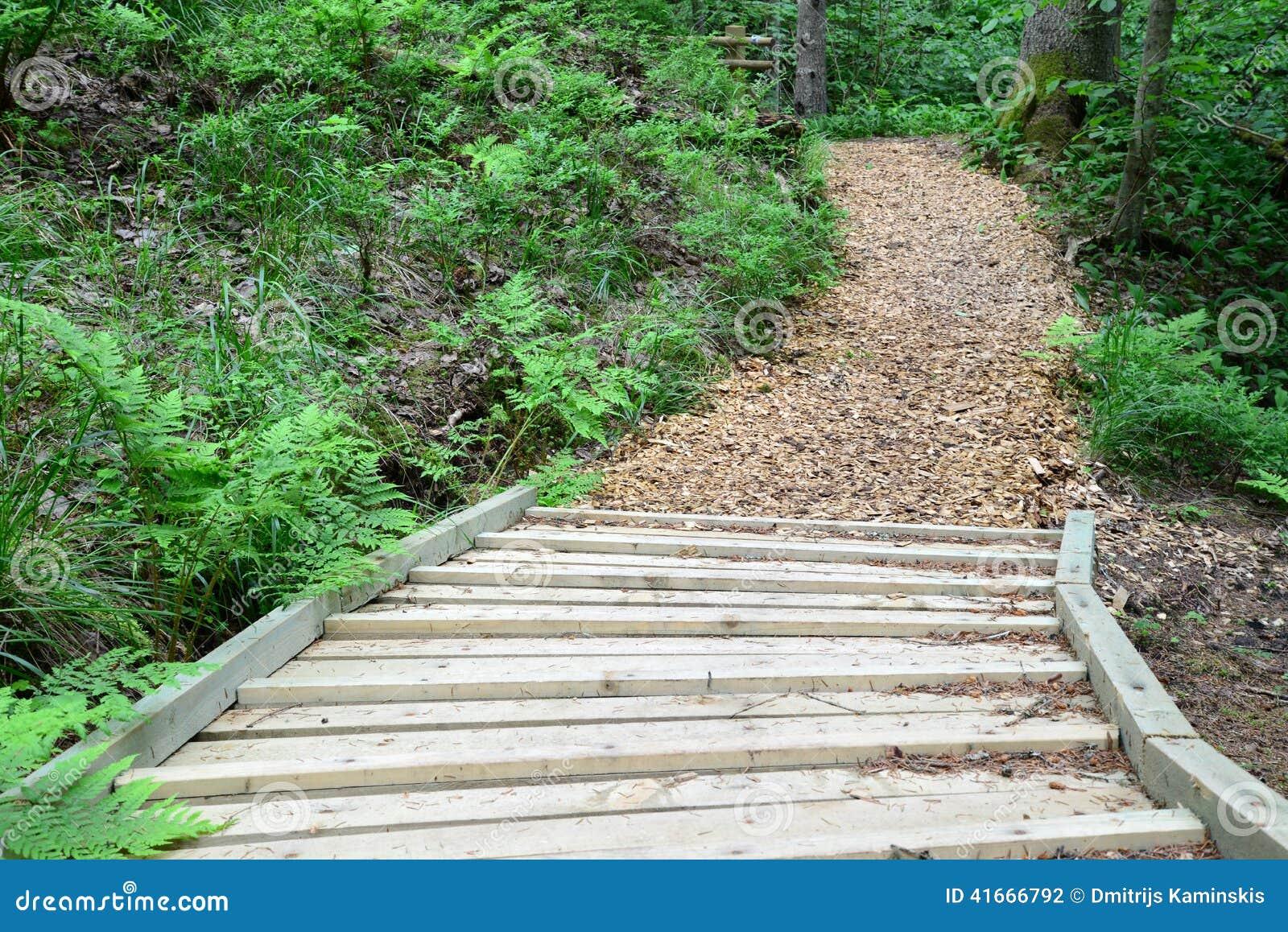 木路在森林锡古尔达里