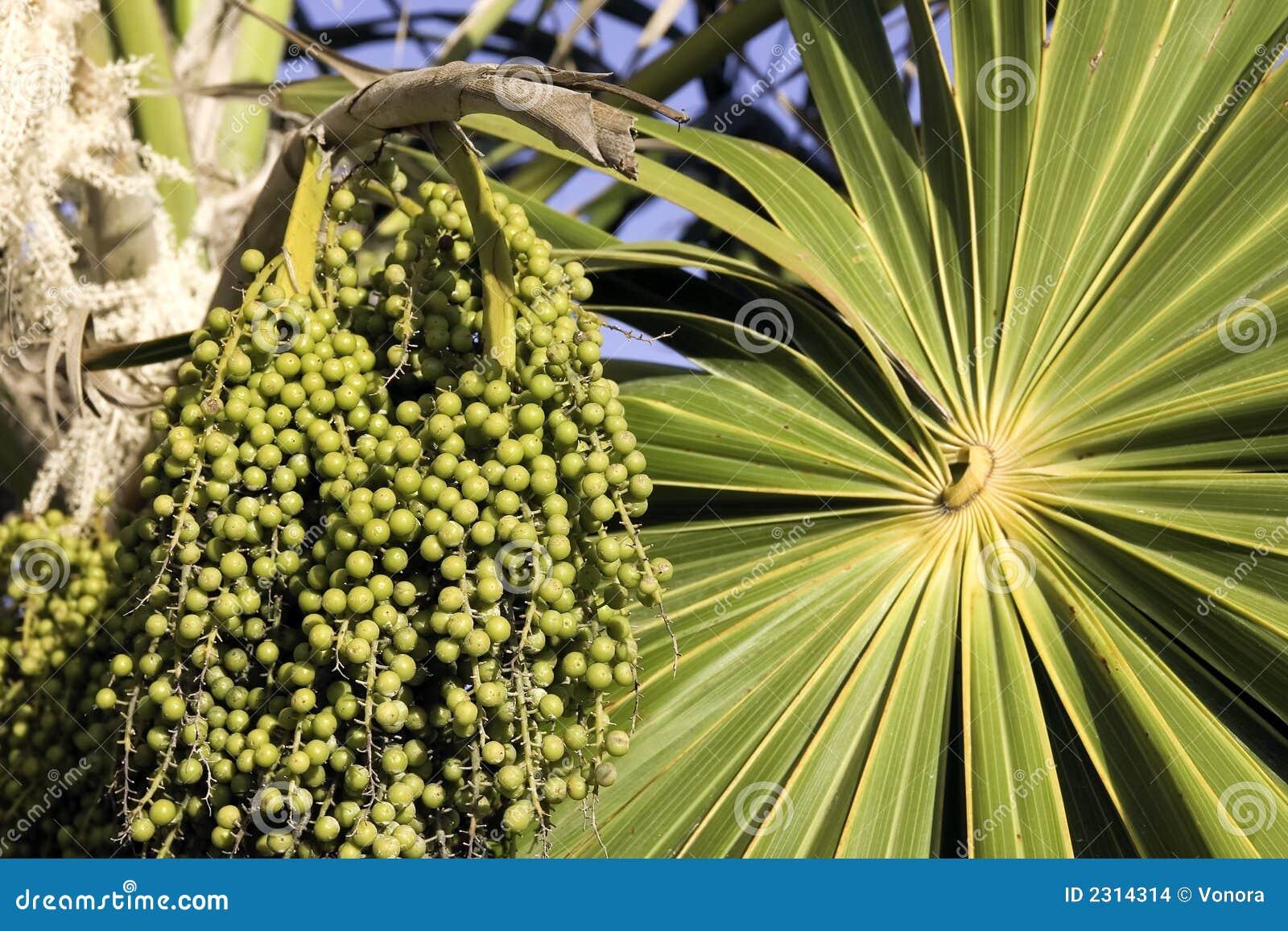 未成熟acai的浆果