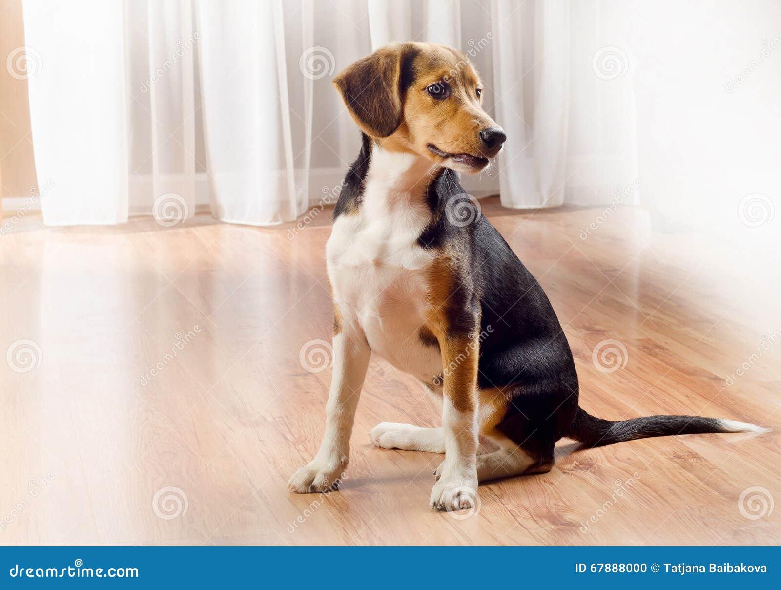 未过滤原始的解决方法被射击unsharpen的小猎犬格式高图象最大的小狗质量是
