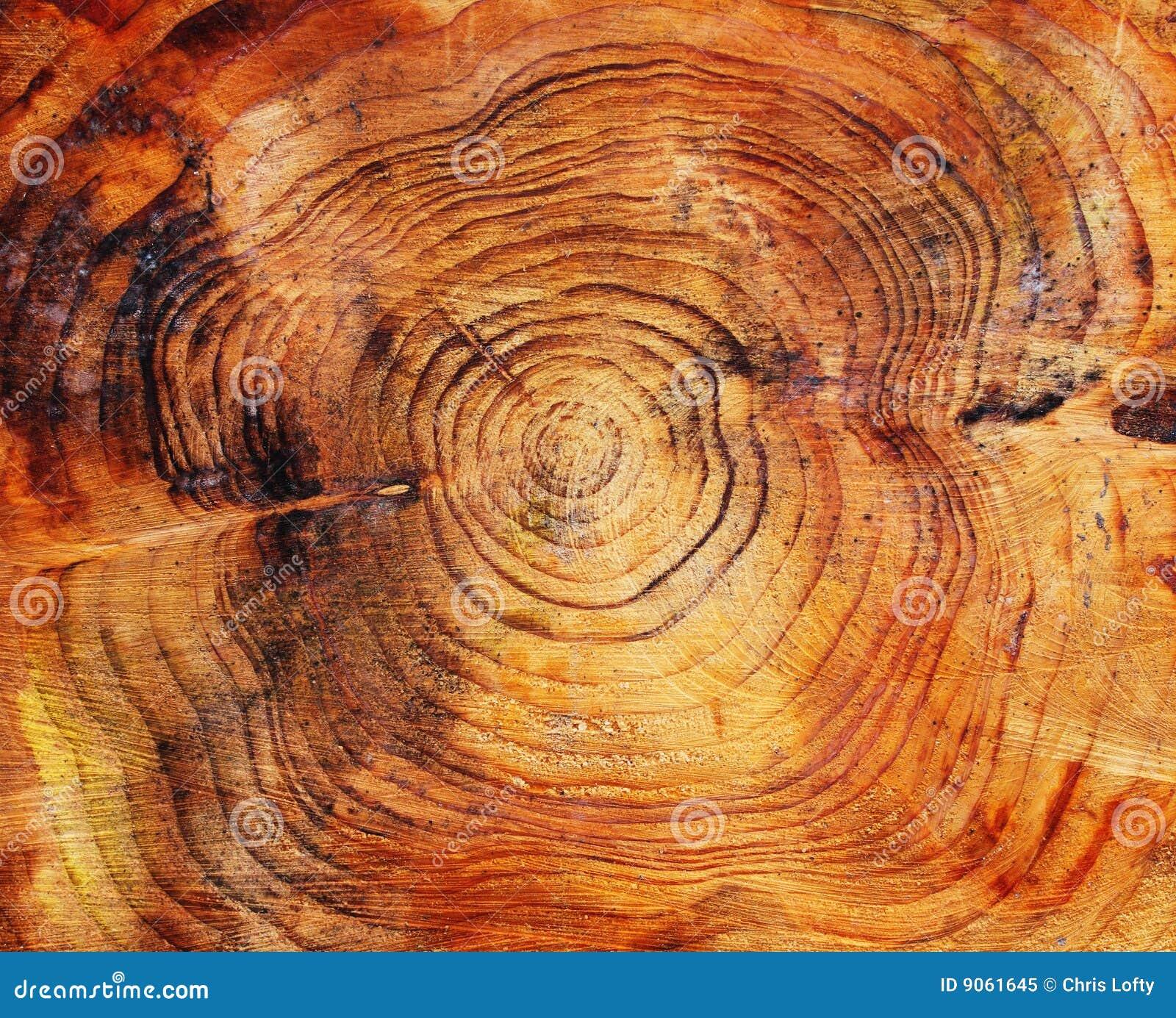 末端杉木锯了结构树