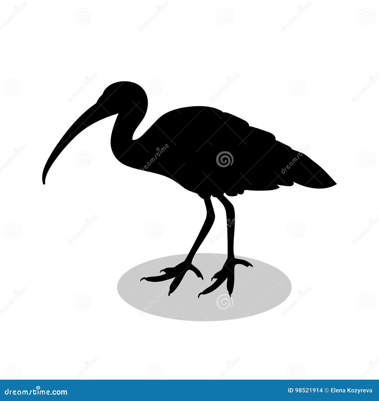 朱鹭鸟黑色剪影动物