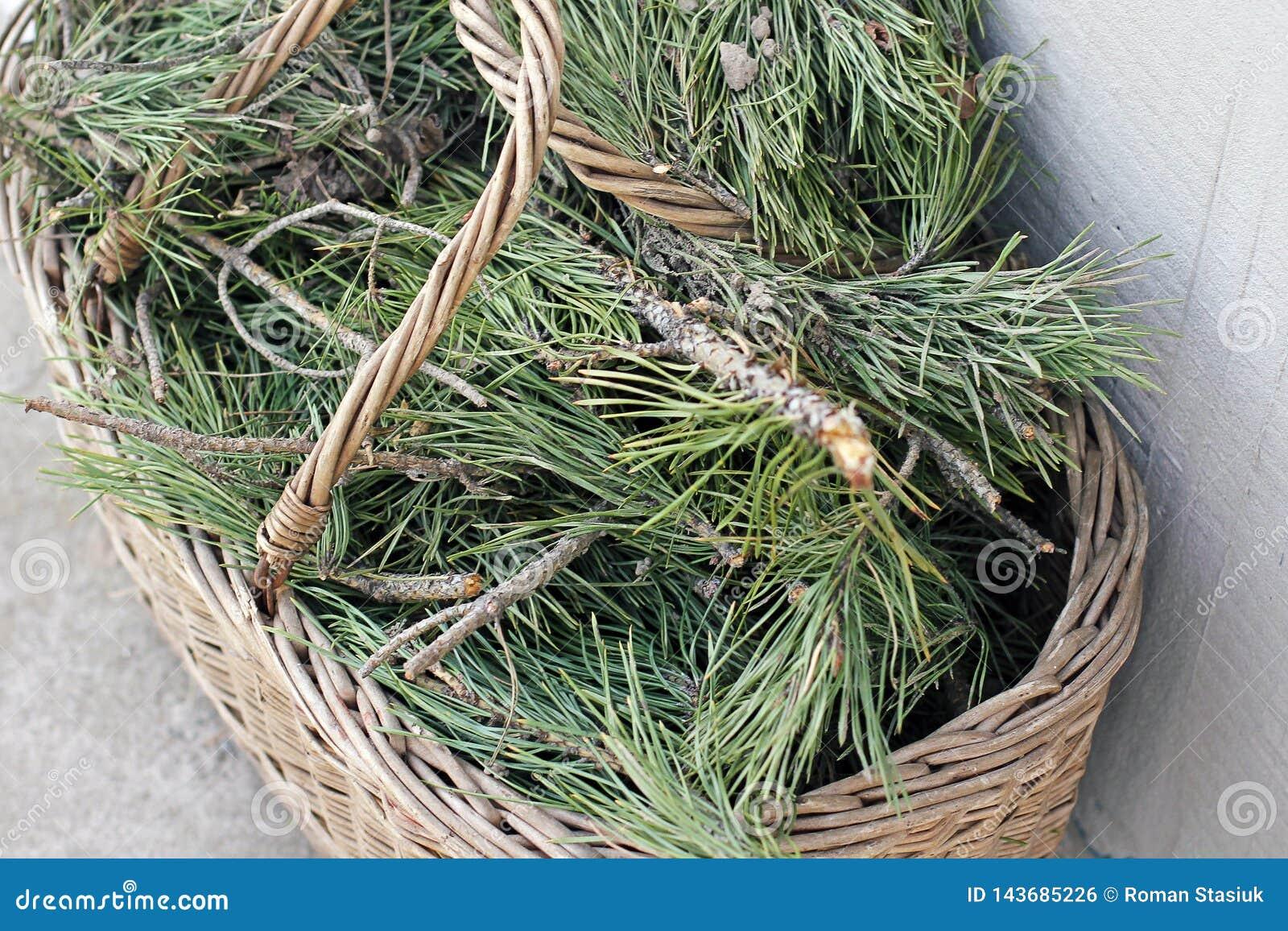 杉木在篮子needles