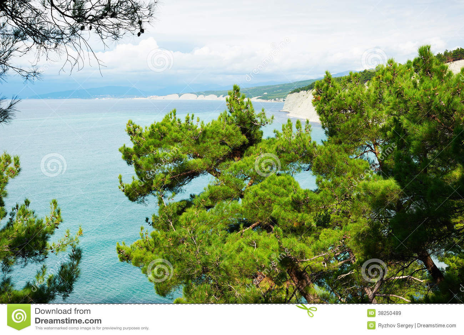 杉木美好的分支在岸的在黑海