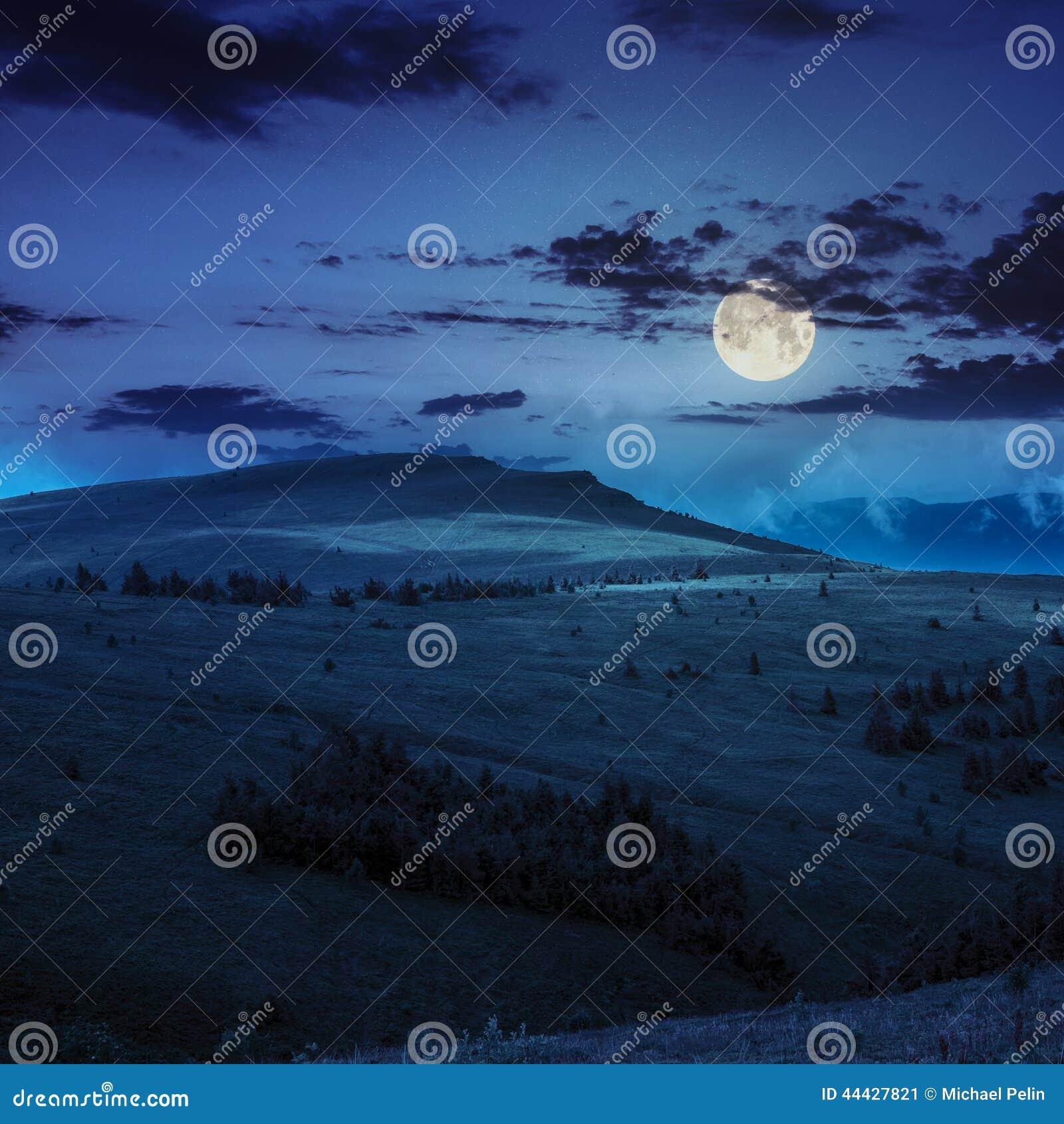杉树在晚上临近在山的谷在山坡
