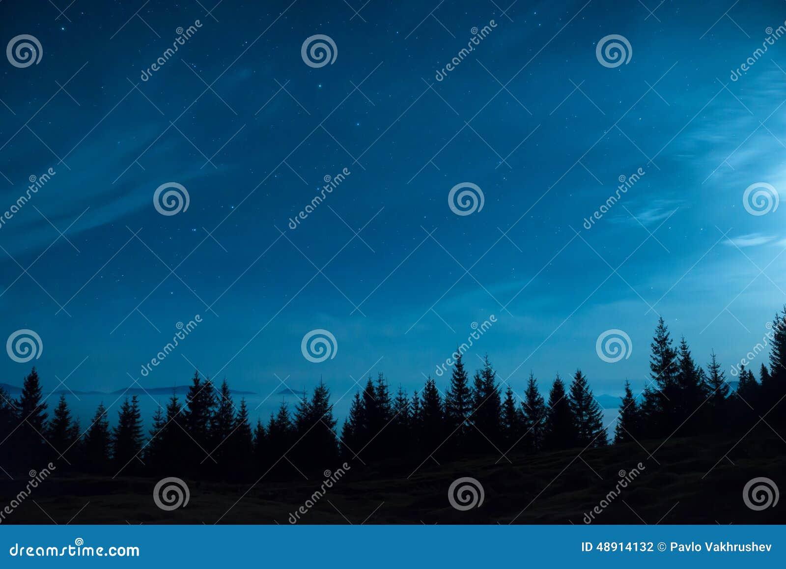 杉树森林在月亮和蓝色黑暗的夜空下的