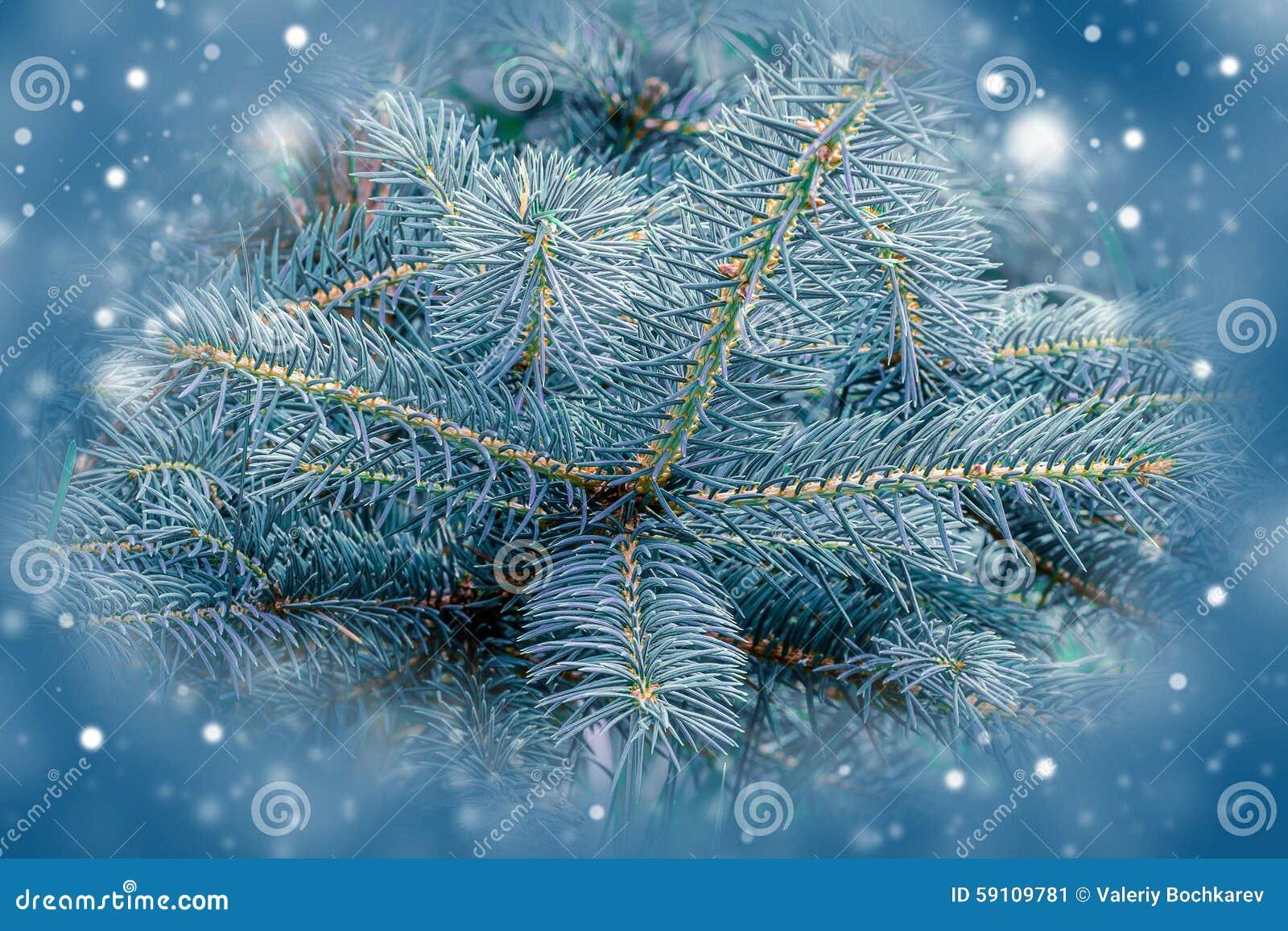 杉树,圣诞节设计的背景