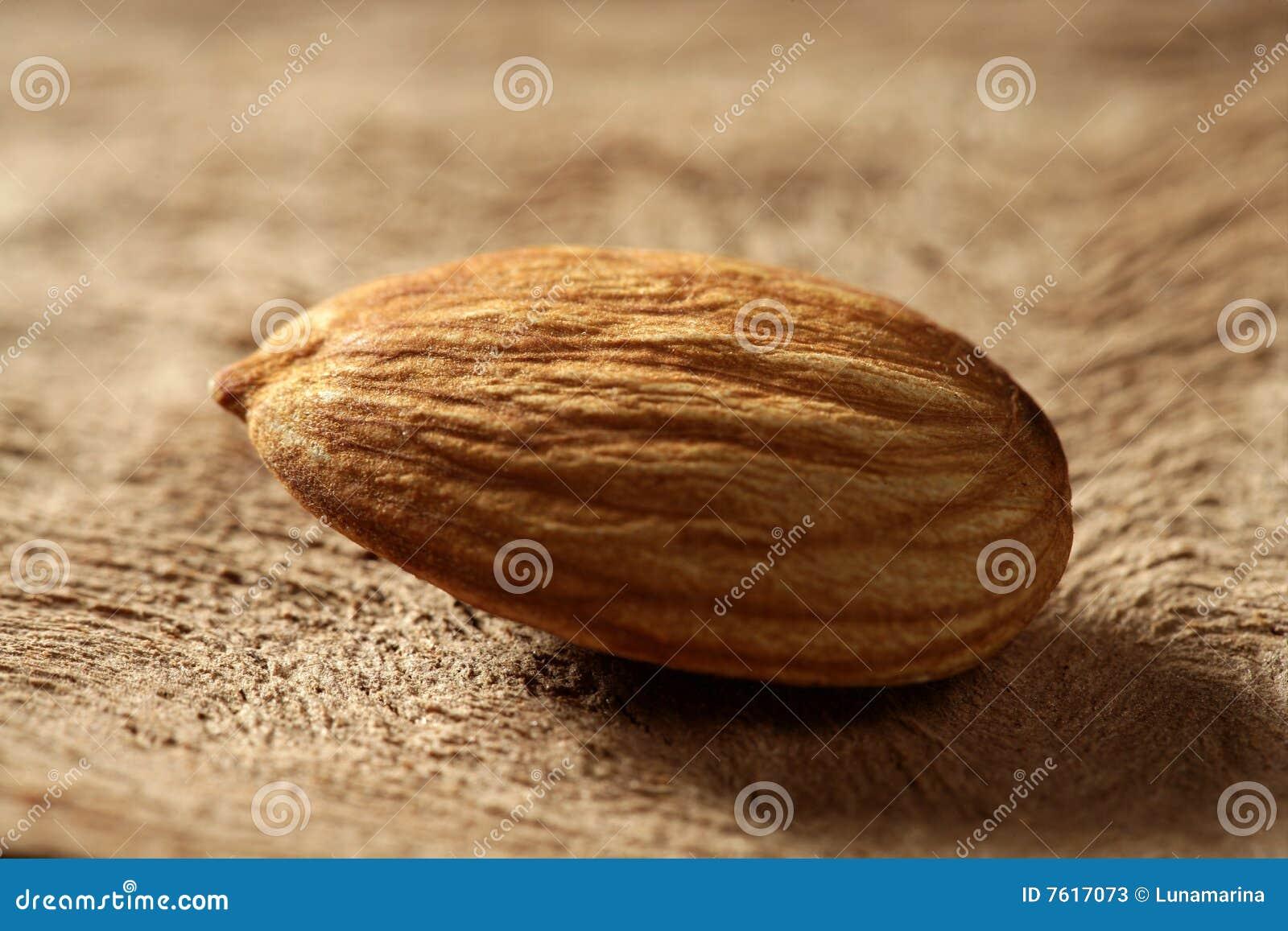 杏仁在木头的果子宏指令