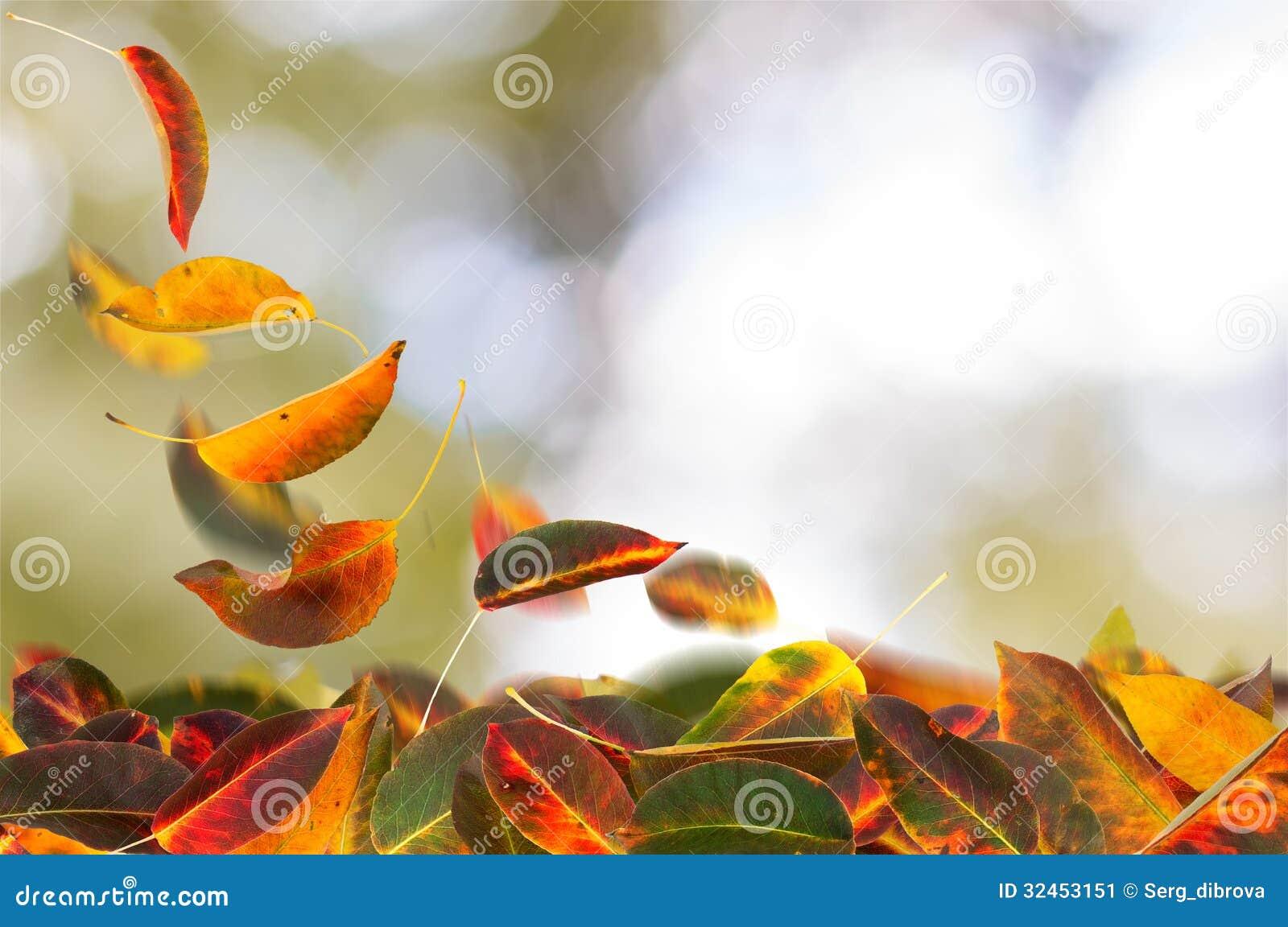 杏子叶子落