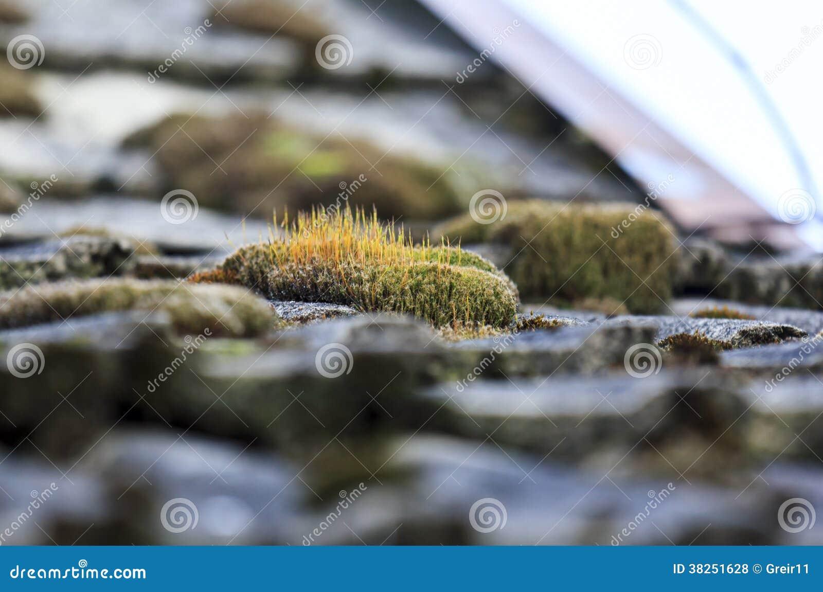 束在铺磁砖的国家屋顶的橙色青苔