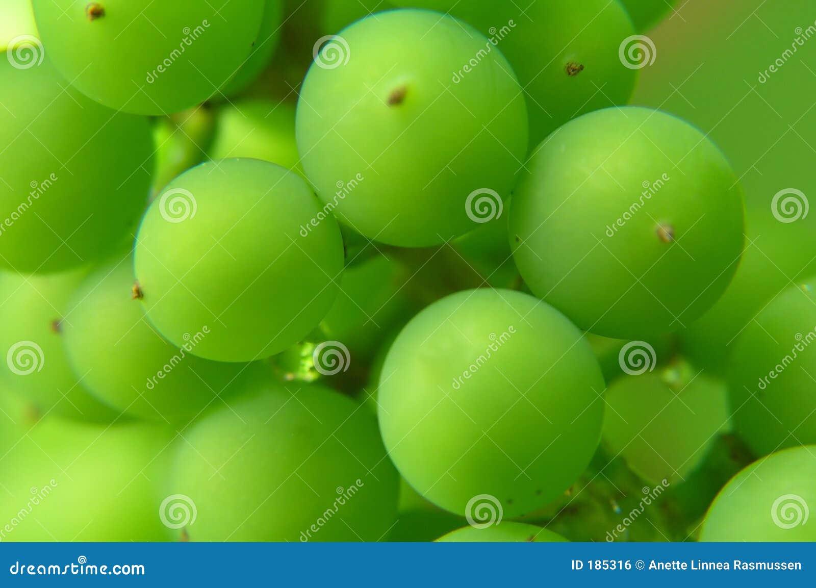 Download 束葡萄绿色 库存照片. 图片 包括有 庭院, 水多, 热带, 麝香葡萄, 绿色, 新鲜, 夏天, 曲线, 圈子 - 185316