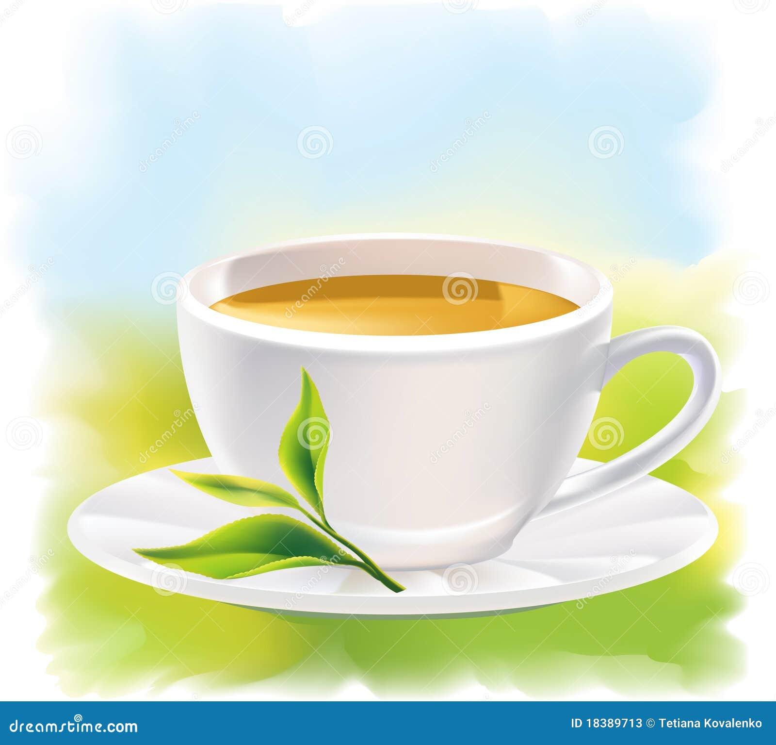 杯子绿色landsca叶子自然晴朗的茶