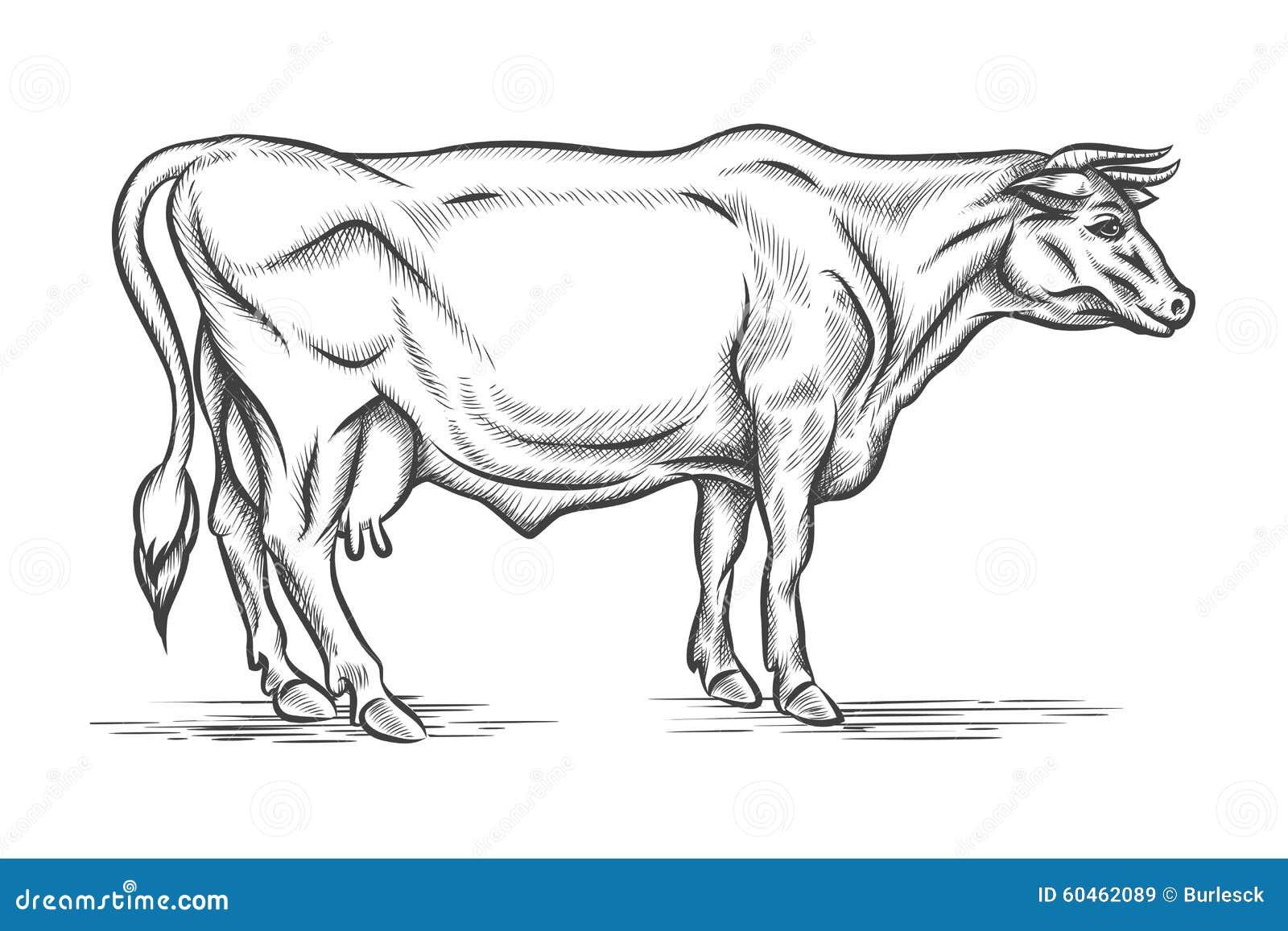 板刻母牛 向量手拉的例证