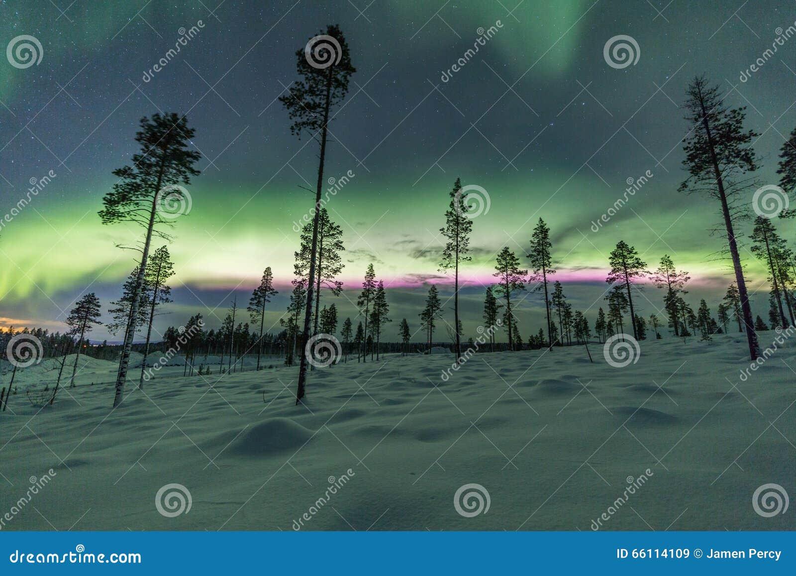 极光borealis (北极光)在芬兰,拉普兰森林