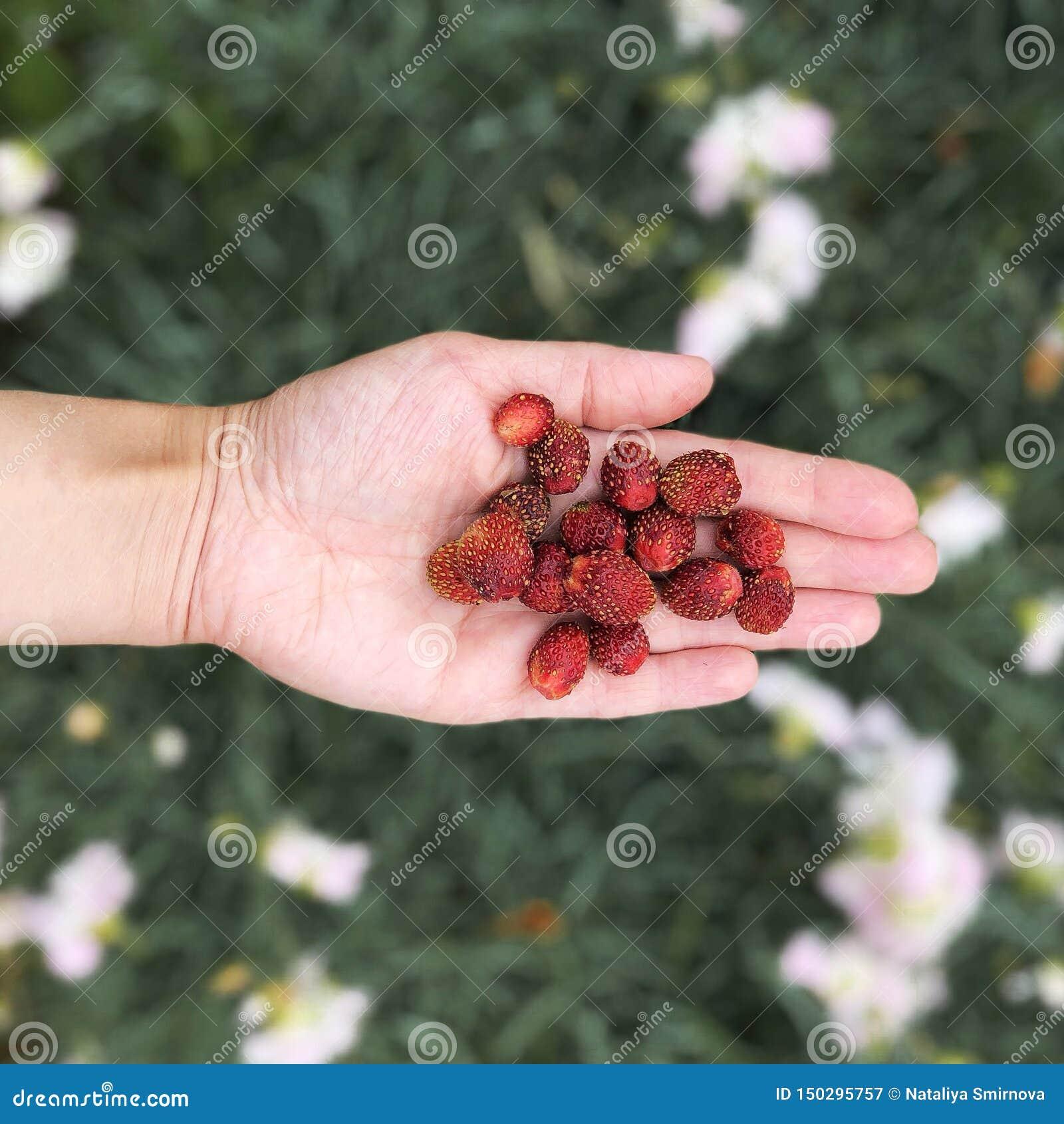 极少数野草莓顶视图