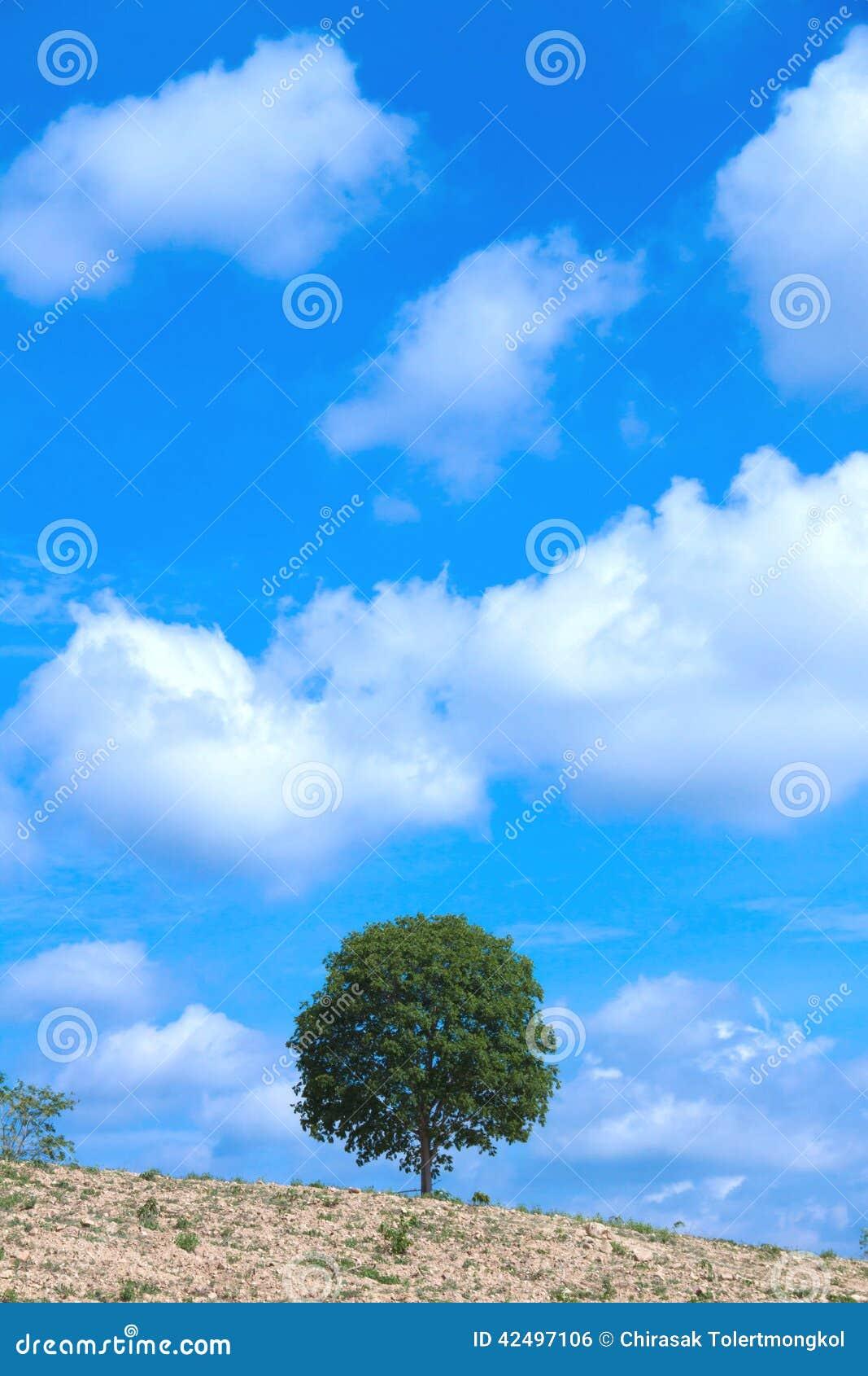 结构树和天空走进农博会海报设计图画图片