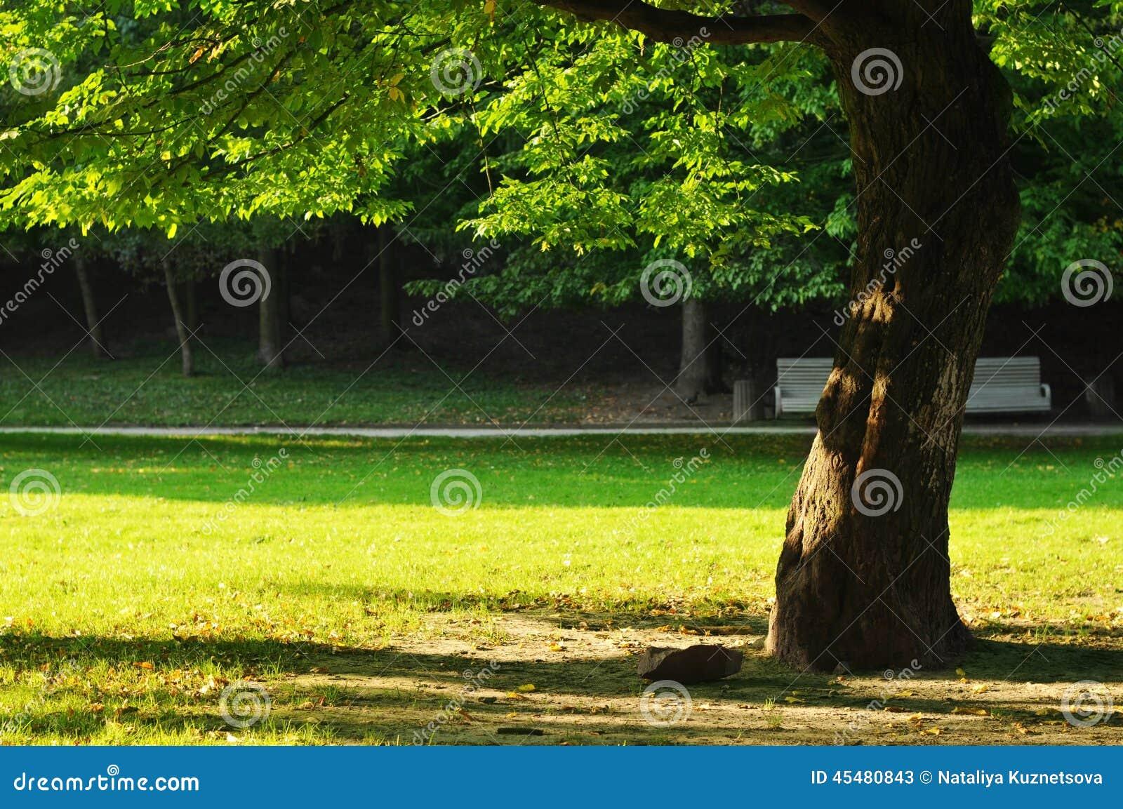 结构树在公园