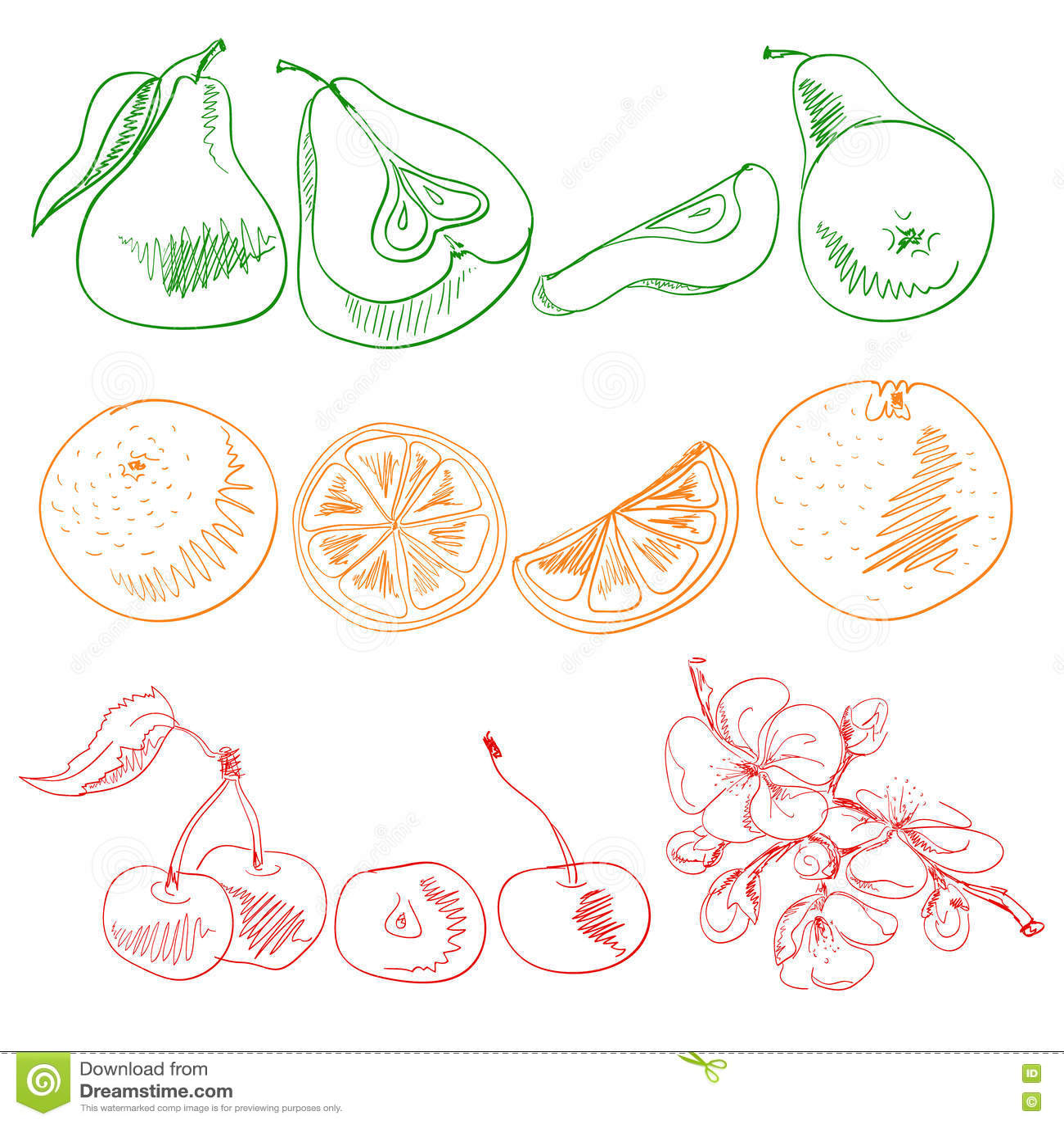 果子和莓果绘与种族分界线