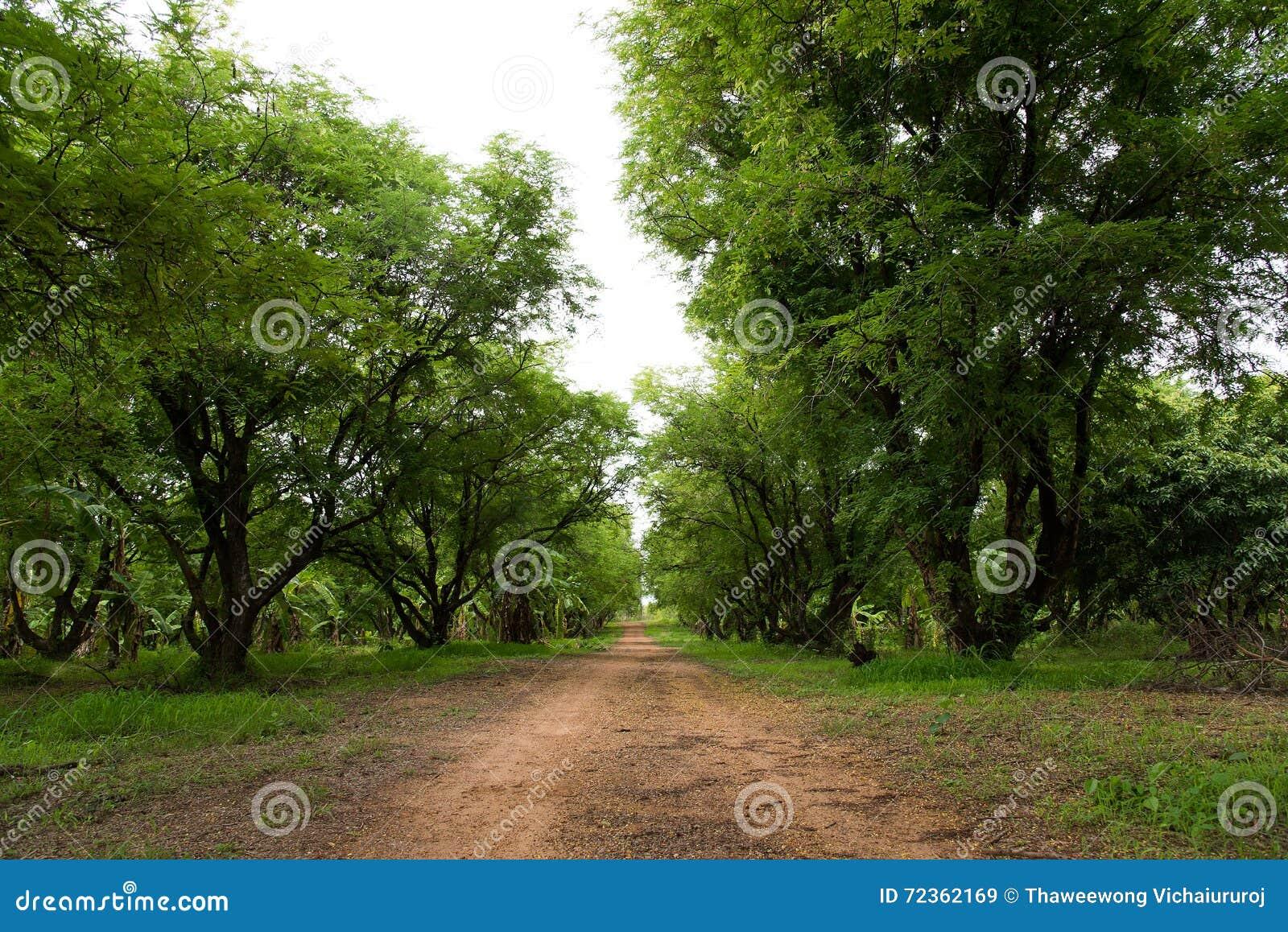 果树园泰国