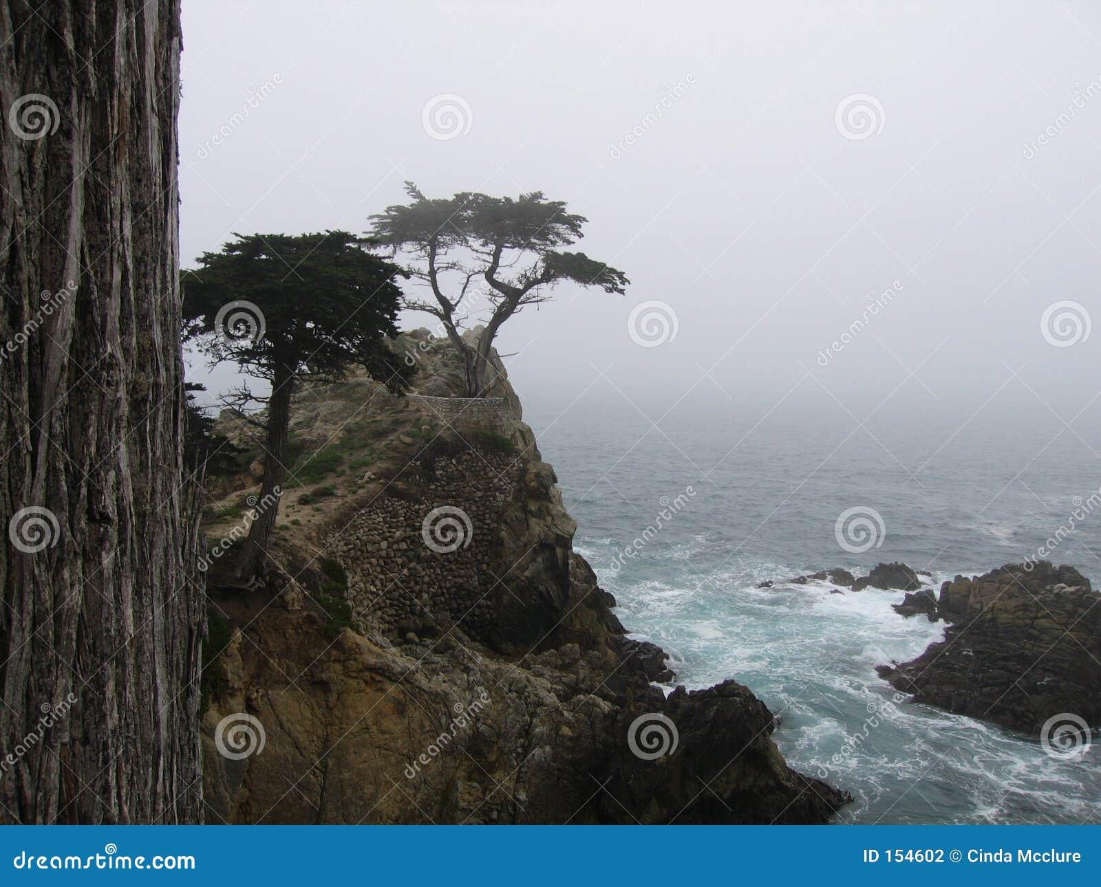 柏孤立结构树
