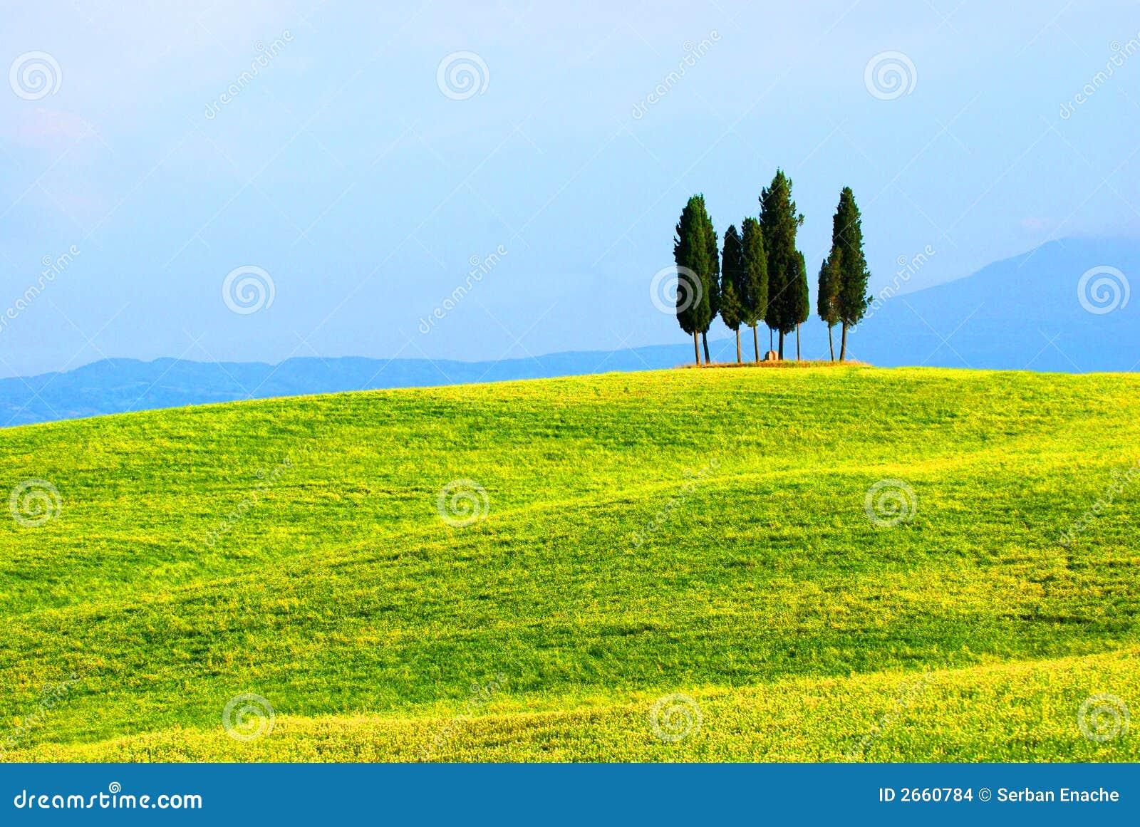 柏调遣绿色结构树