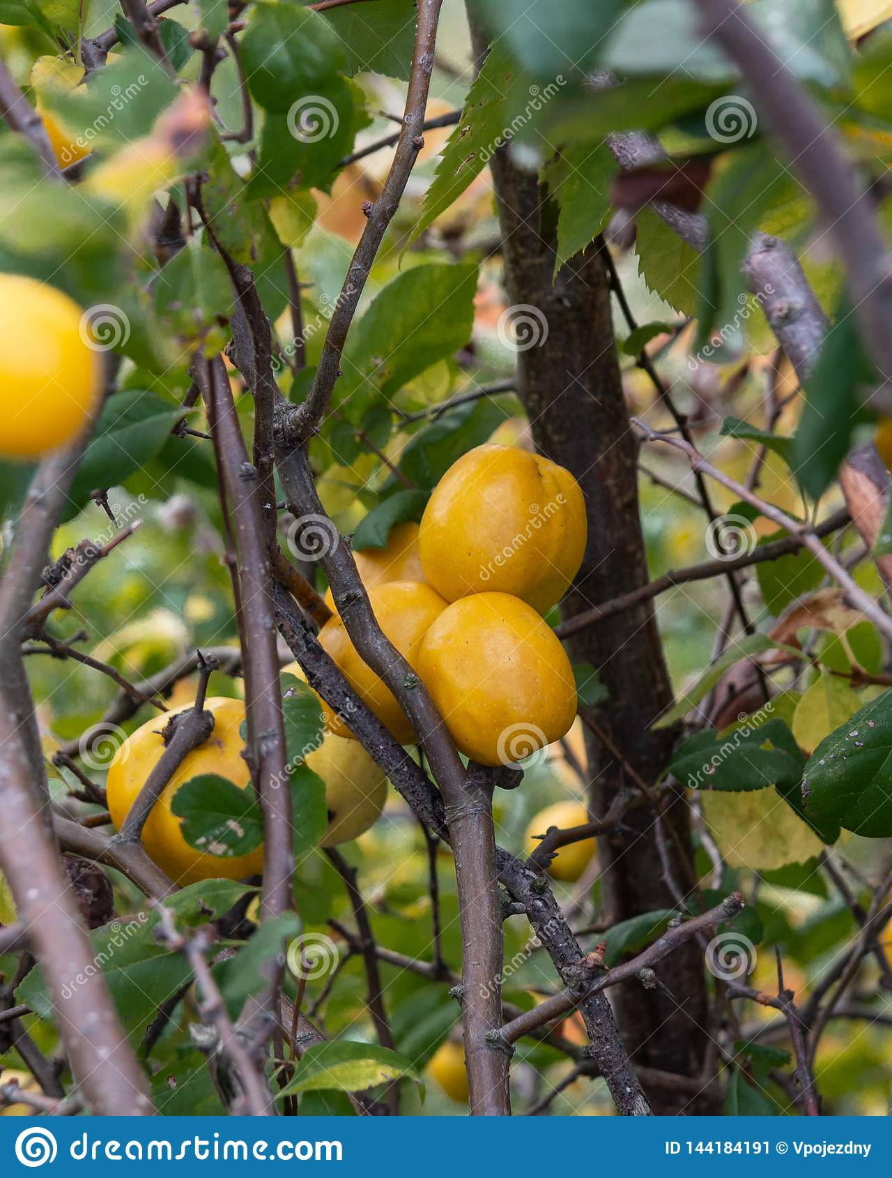 柑橘的细节