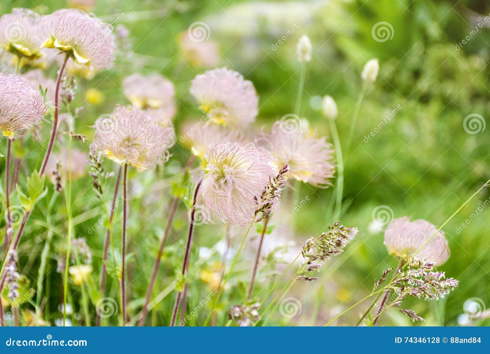 柔和的山开花背景