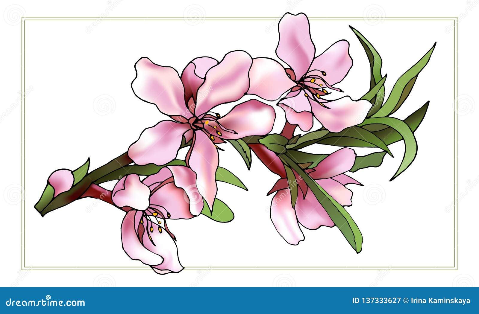 柔和的粉色传染媒介拉长的花