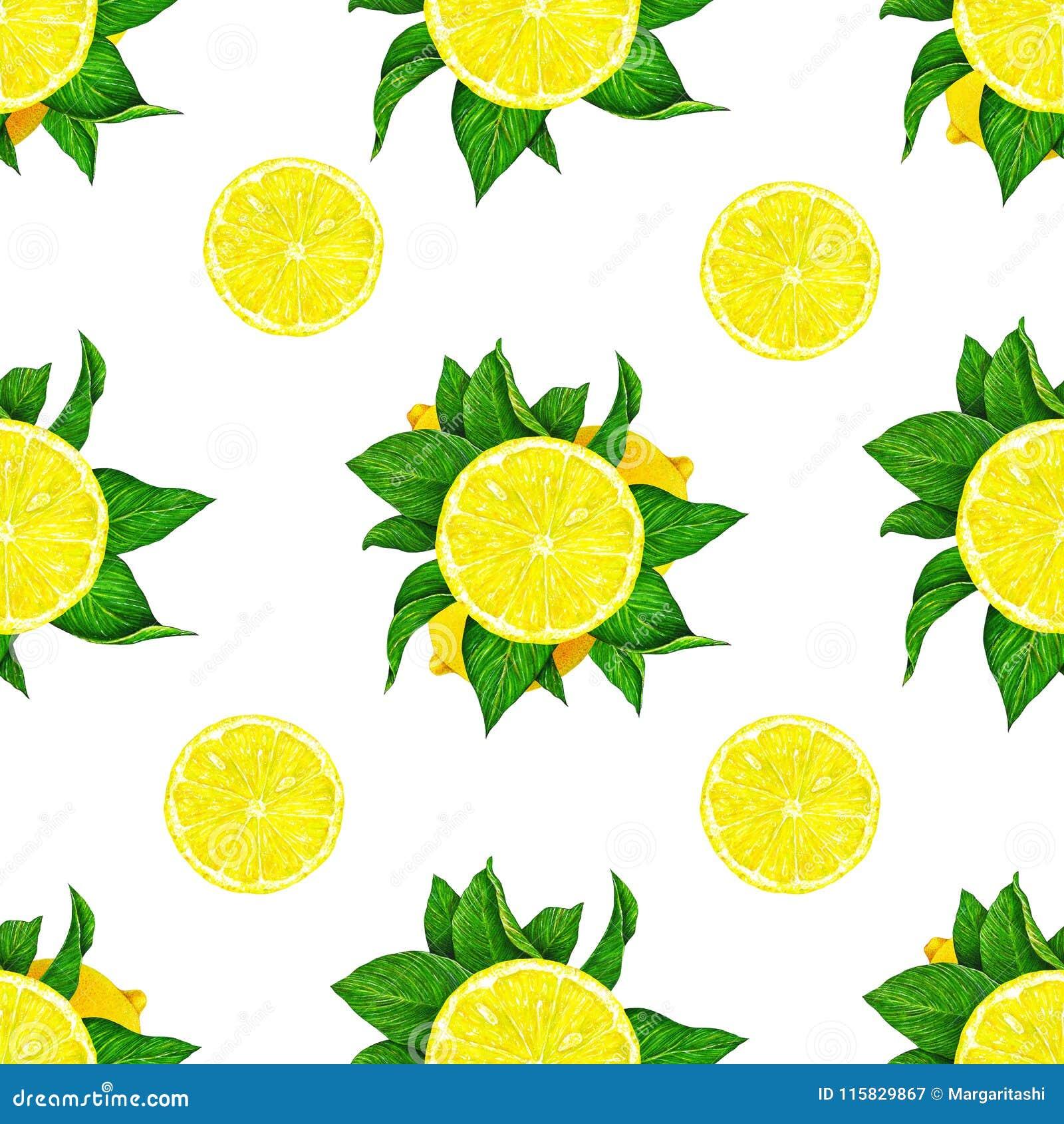 柠檬结果实与在白色背景隔绝的绿色叶子 得出设计的水彩无缝的样式