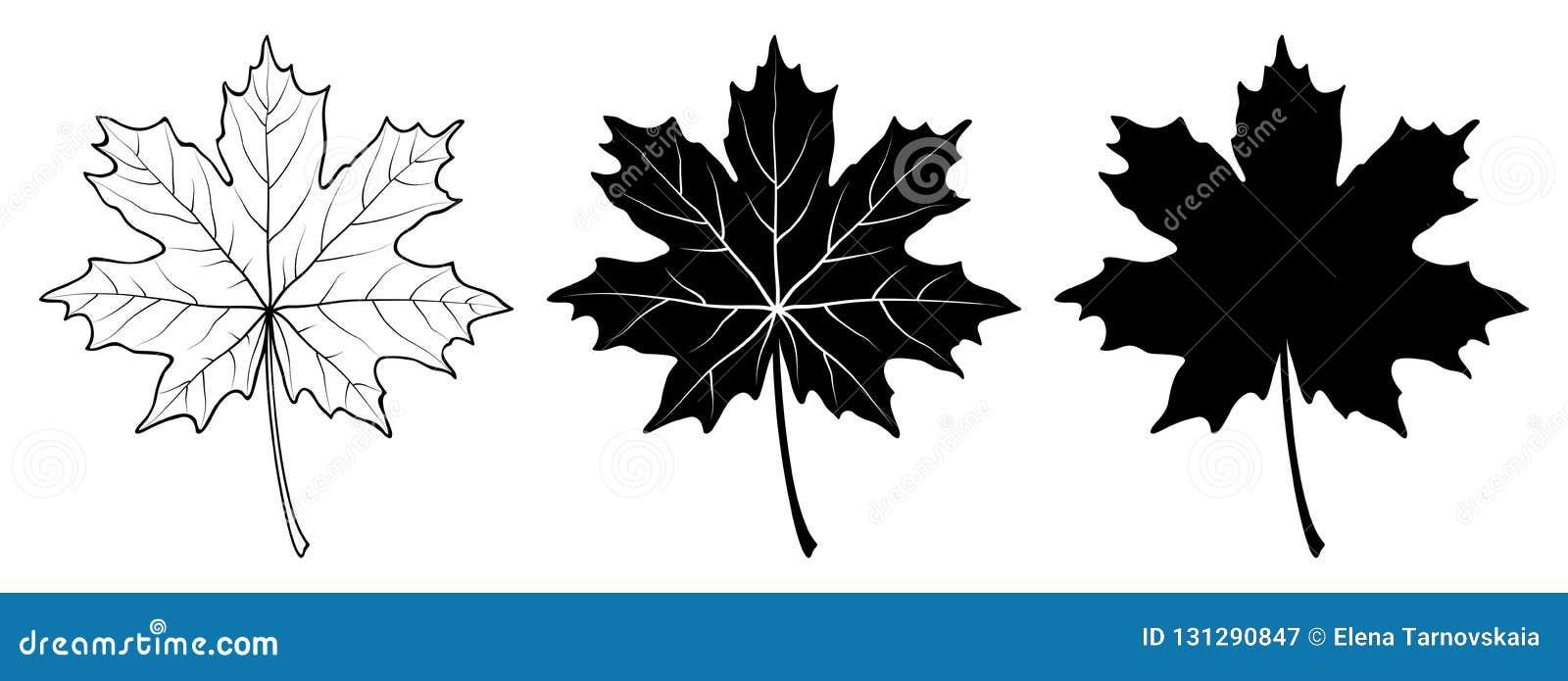 查出的叶子槭树 线性,剪影 也corel凹道例证向量