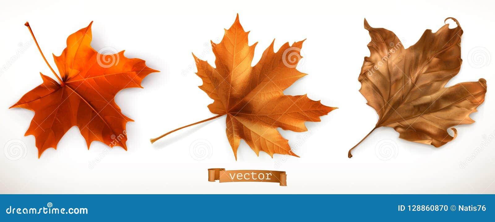 查出的叶子槭树 3D向量图标